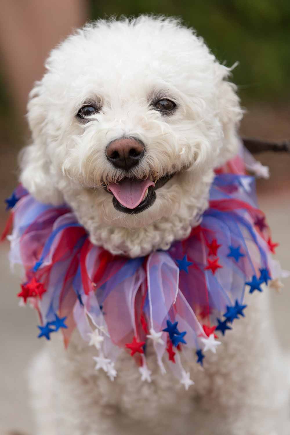 A dog decked out for the annual I'On Community Independence Day Parade in Mt Pleasant, South Carolina, July 4, 2012.