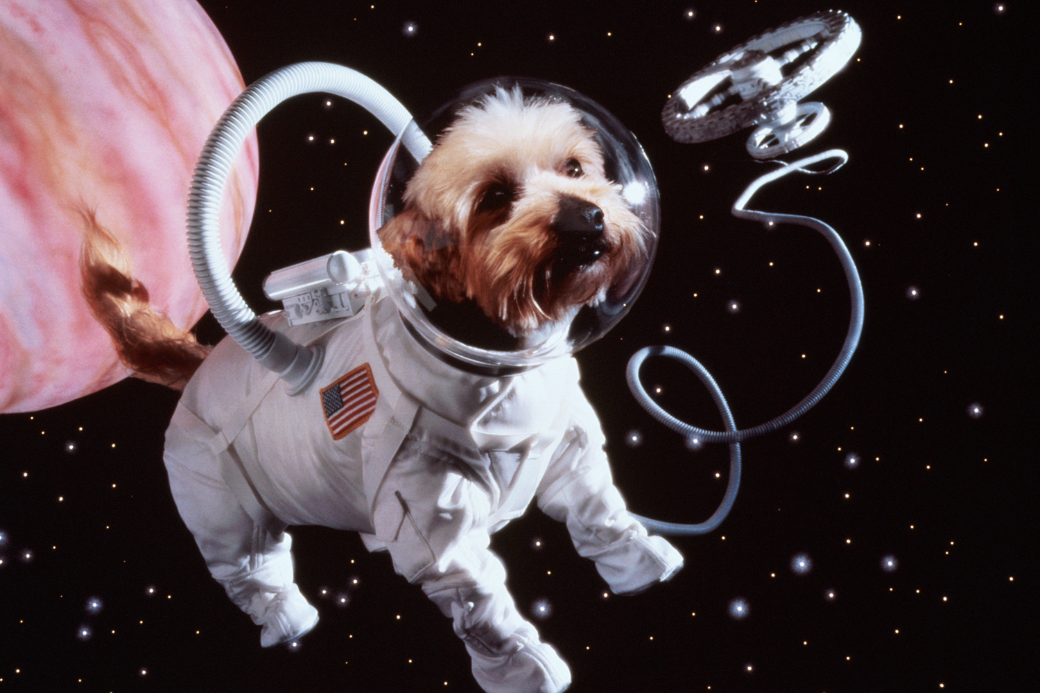 Unlike this stock photo, your pet's cremated remains would be sent to space in capsules.