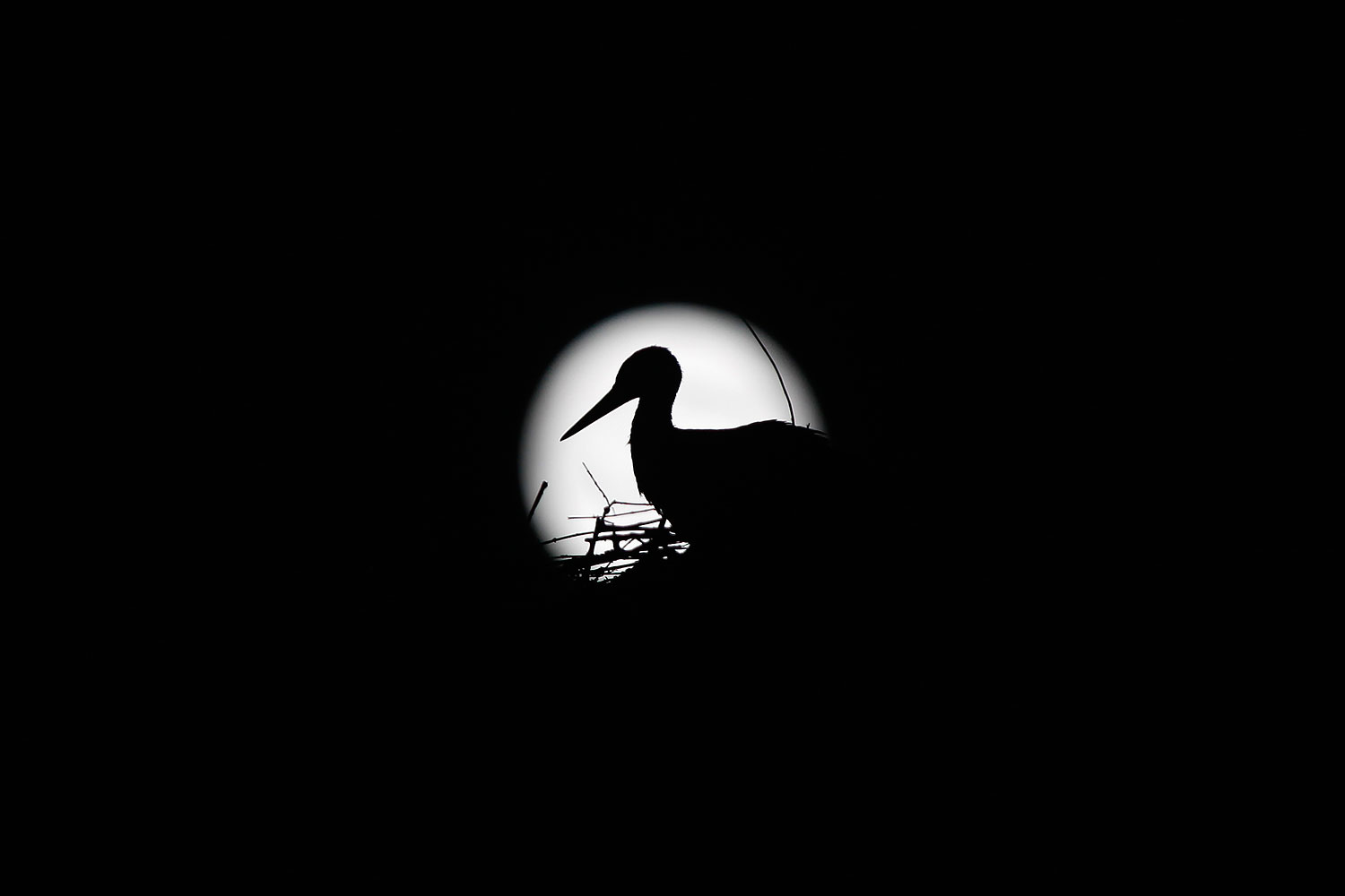 A stork is silhouetted against the Supermoon in its nest in downtown Arriate, in the southern Spanish province of Malaga early July 13, 2014.