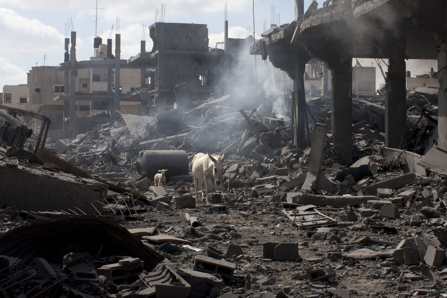 Jul. 26, 2014. A small white lamb follows a white donkey through the rubble of homes  in the northern district of Beit Hanun in the Gaza Strip during an humanitarian truce.