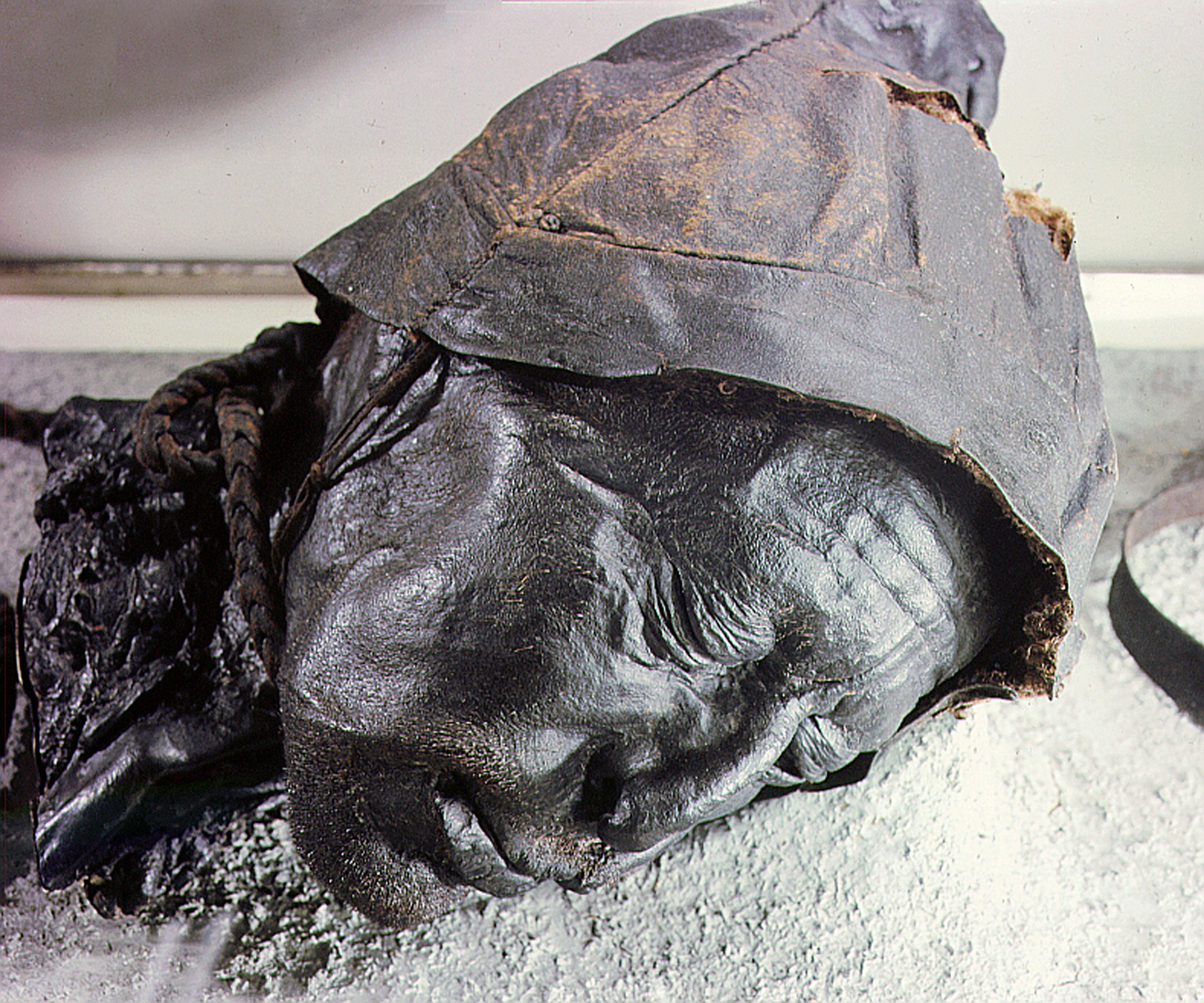 Tollund man, victim of human sacrifice by ritual strangulation in Denmark.