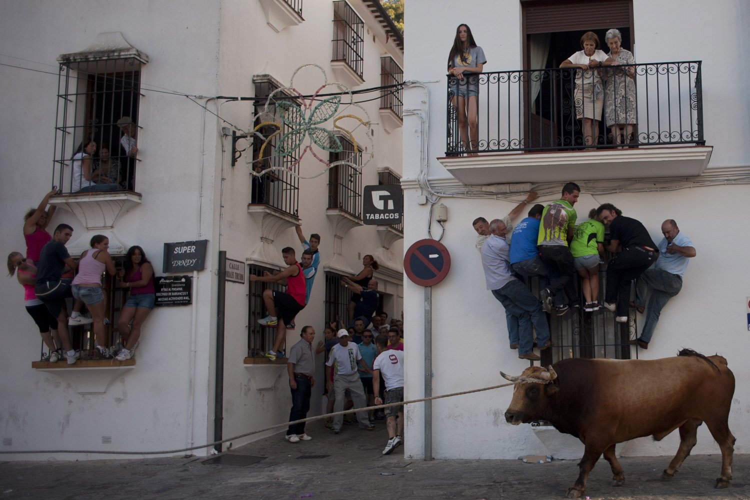 Jul. 21, 2014. People climb onto window ledges to try to avoid a bull during the bull rope festival through the streets of Grazalema, Spain.