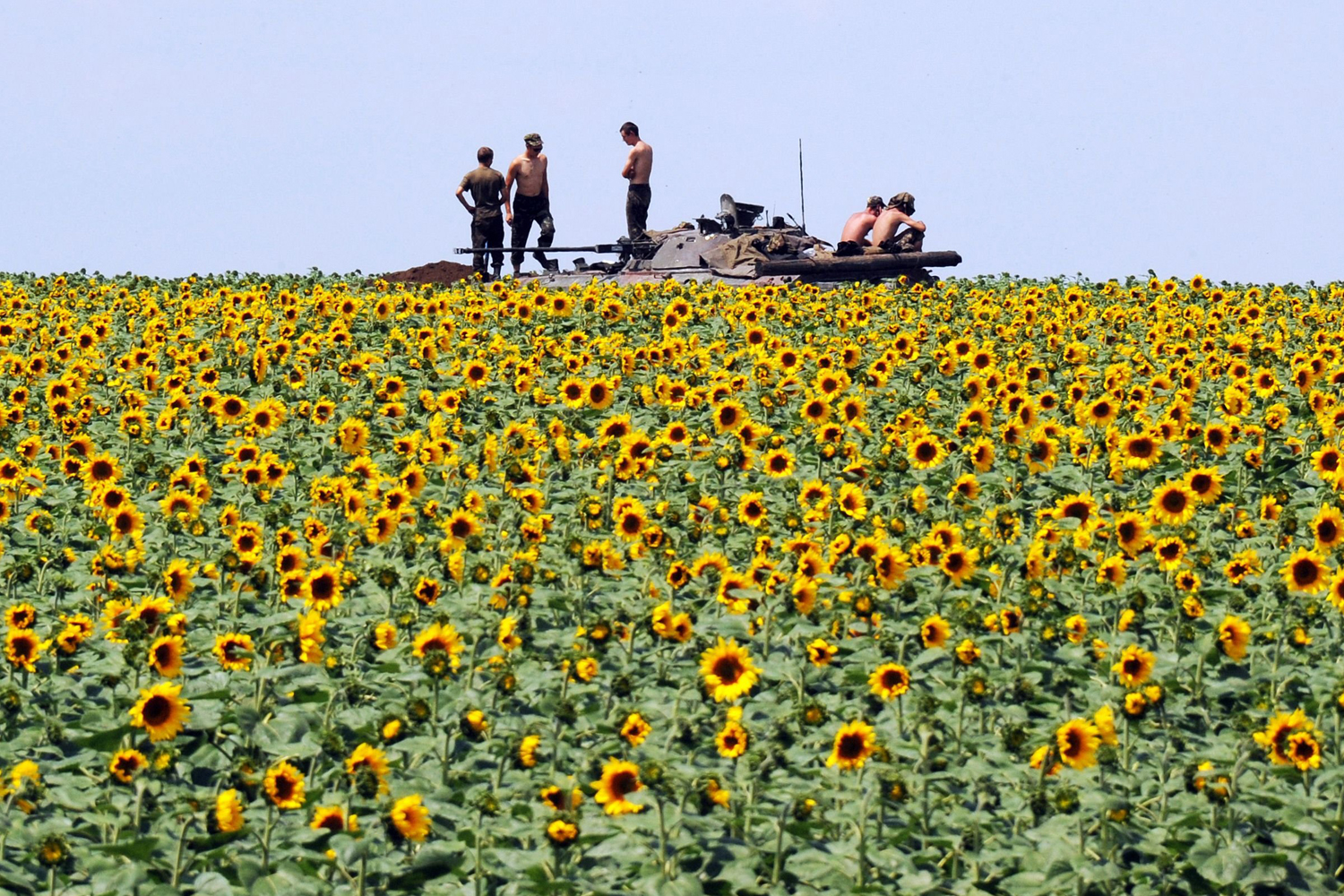 Jul. 10, 2014. Ukrainian government soldiers sit on an armoured vehicle as they take up a position in a sunflower field around 20 Km south of Donetsk.