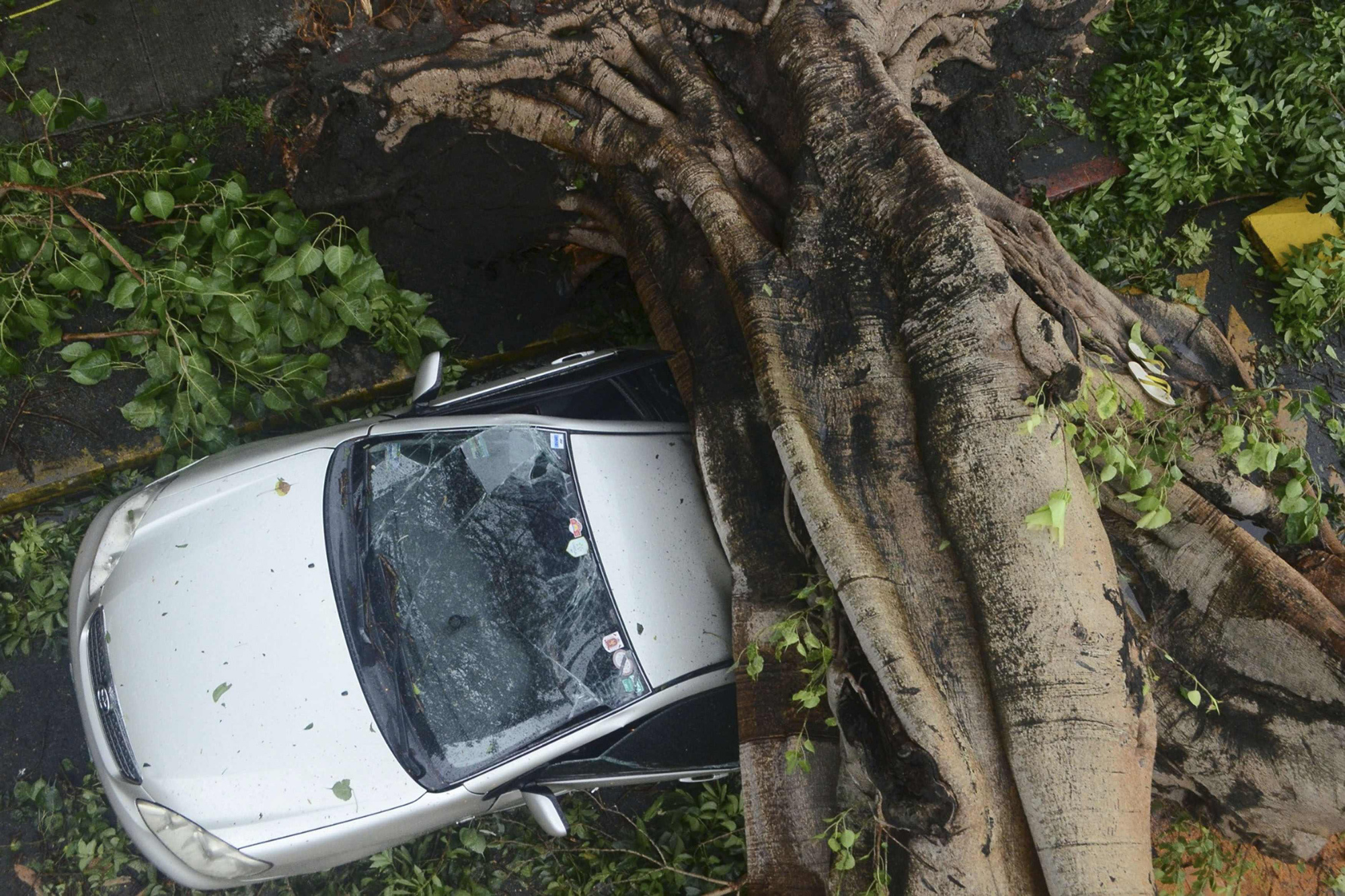 A huge tree crushes a car during the onslaught of Typhoon Rammasun  that hit Makati city in Manila July 16, 2014.