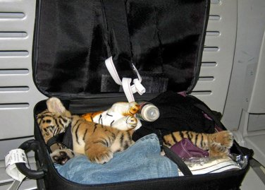 Thailand Tiger Luggage