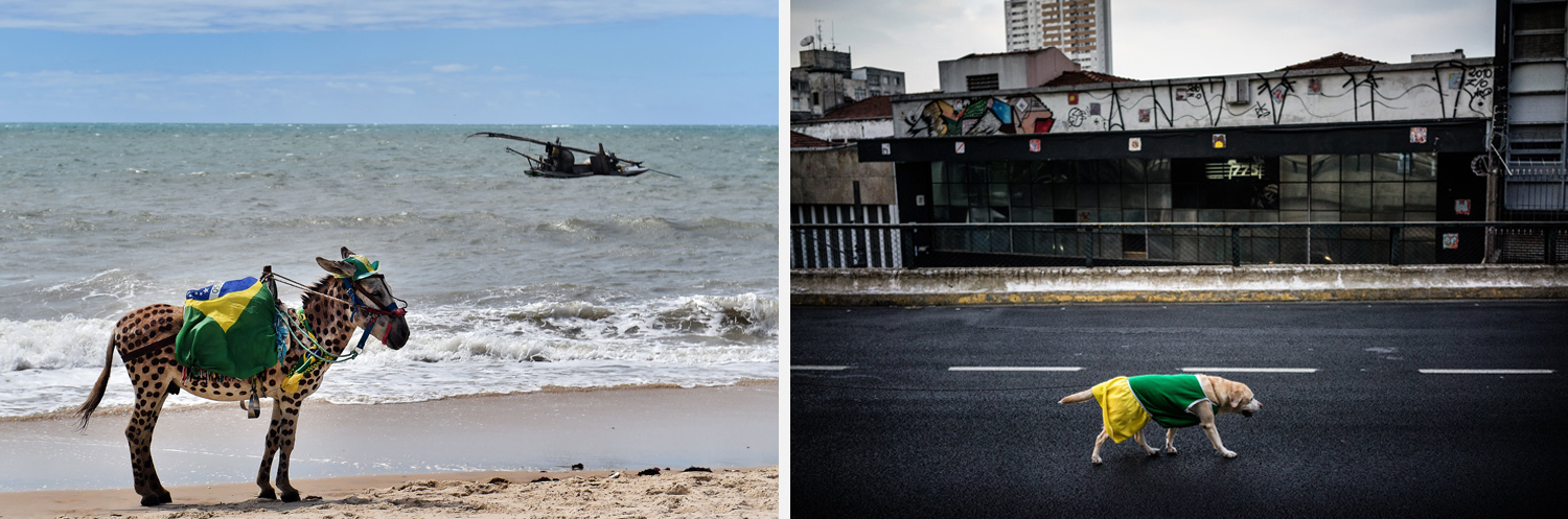 Left: A donkey wears the colors of Brazil as it stands on a beach of Cumbucu, Brazil. Right: A dog wearing Brazilian soccer team colors walks on the Minhocao, a 2.2-mile stretch of highway, in Sao Paulo.