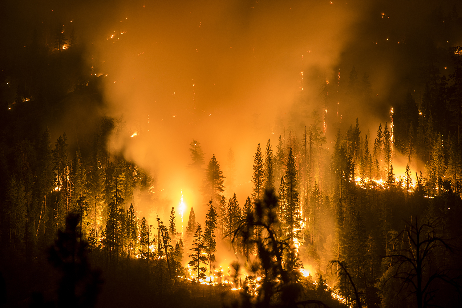 The French Fire burns overnight in the Sierra National Forest near Mammoth Pool, Calif. By morning  the fire had burned over 11,400 acres. August 1, 2014.