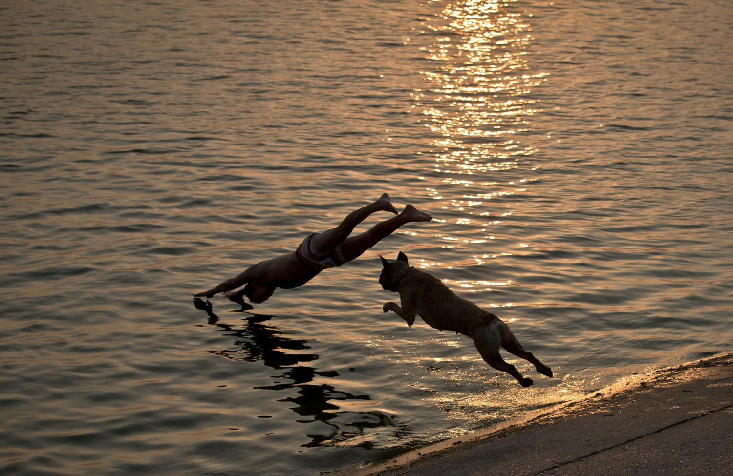Aisha the dog follows her owner as he jumps into a lake at sunset in Bucharest, Romania on August 12, 2014.