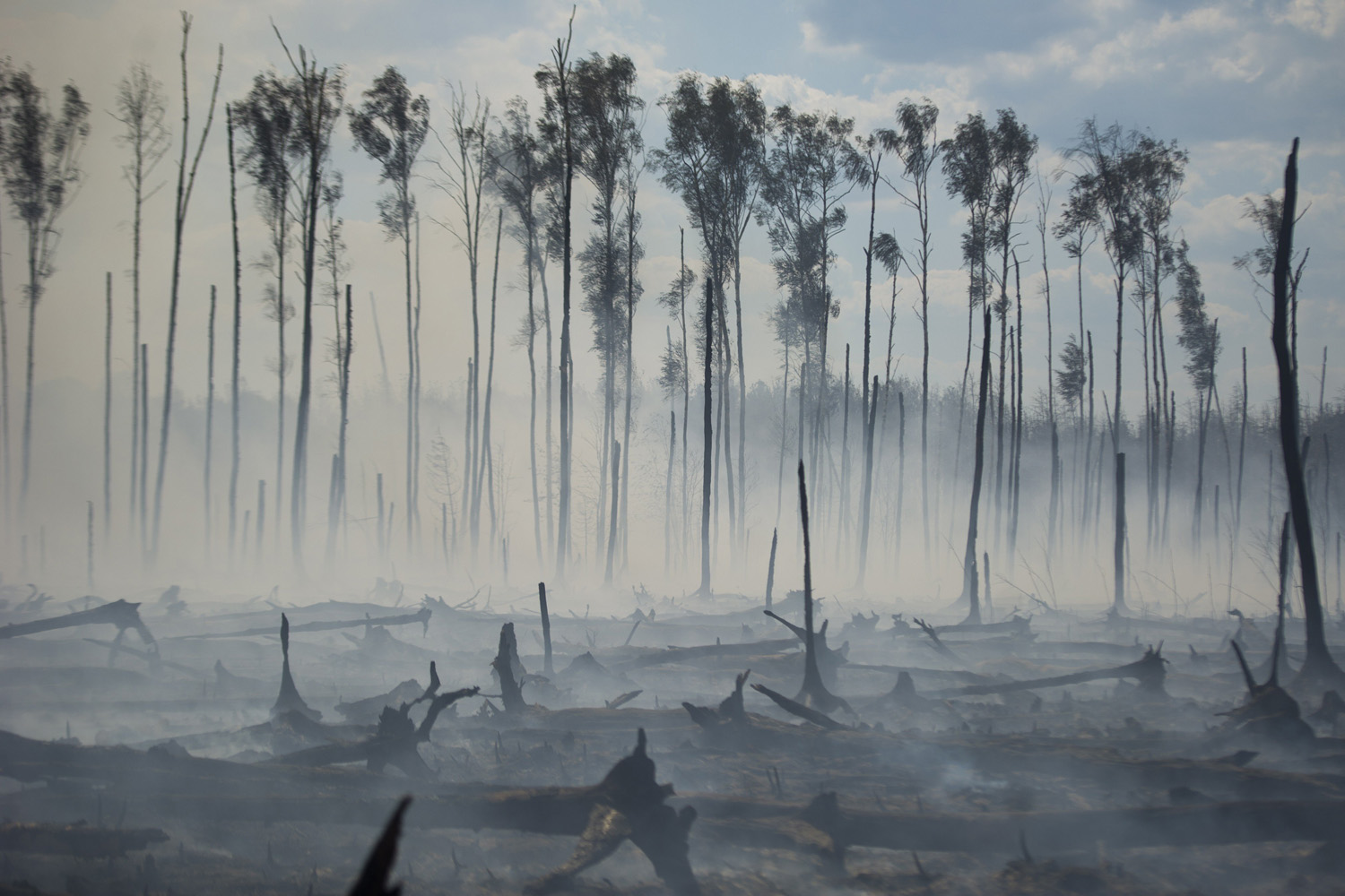 Jul. 31, 2014.  A forest ravaged by a peat fire that emerged due to an abnormal heat.
