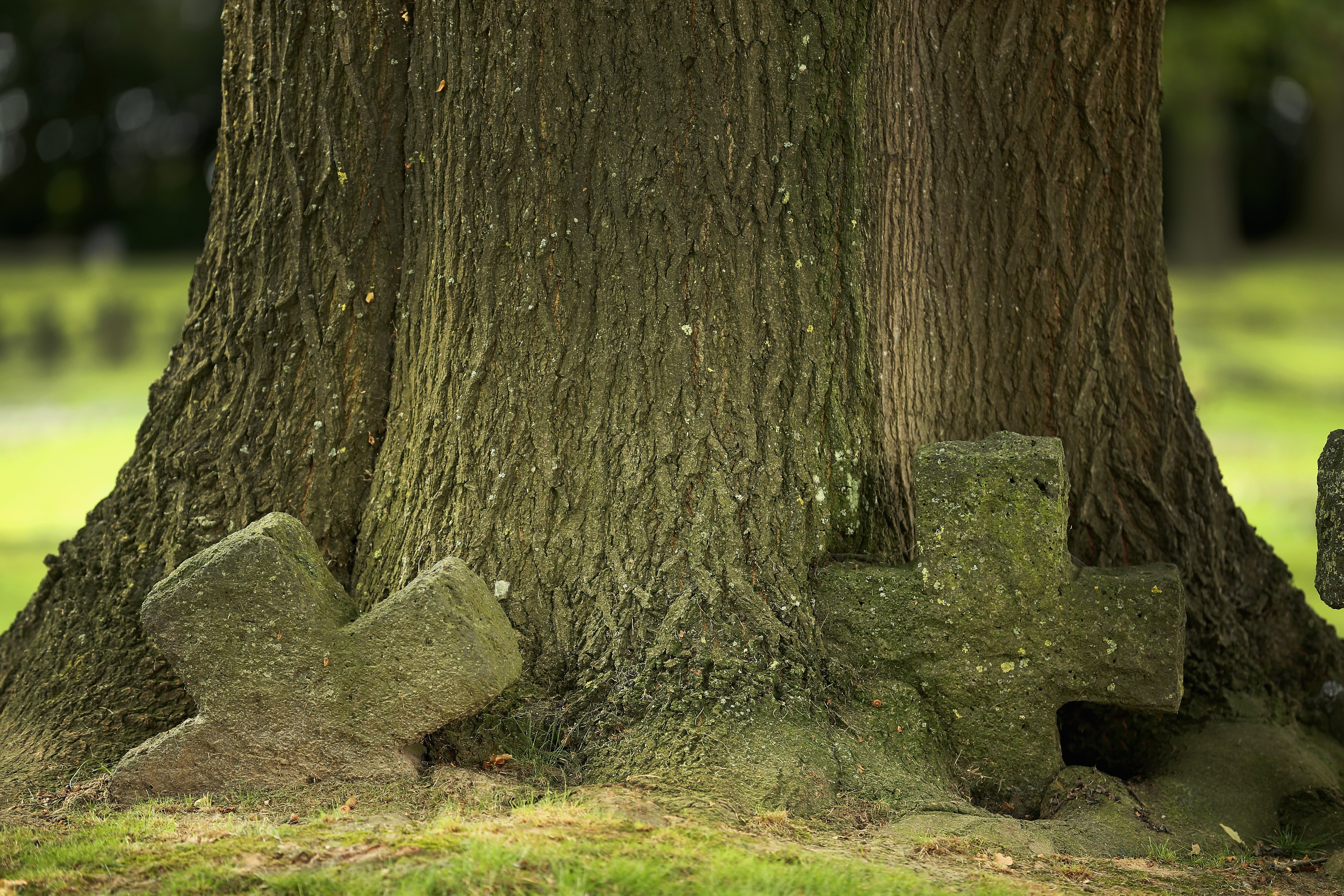 Aug. 4, 2014. Stone crosses marking the graves of German soldiers are overtaken by time and and the growing trunk of a tree in Hooglede German Military Cemetery on the centenary of the Great War in Hooglede, Belgium.
