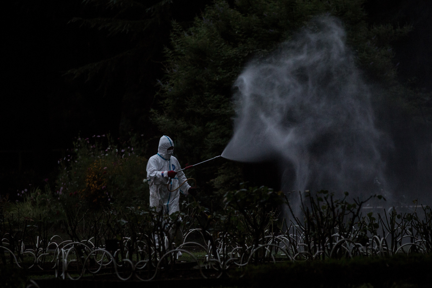 Aug. 28, 2014. A workman sprays pesticide in Yoyogi Park in Tokyo, Japan. Sections of Yoyogi Park were closed to the public today as they underwent  fumigation after three people were diagnosed with dengue fever after suffering mosquitoe bites in the park.