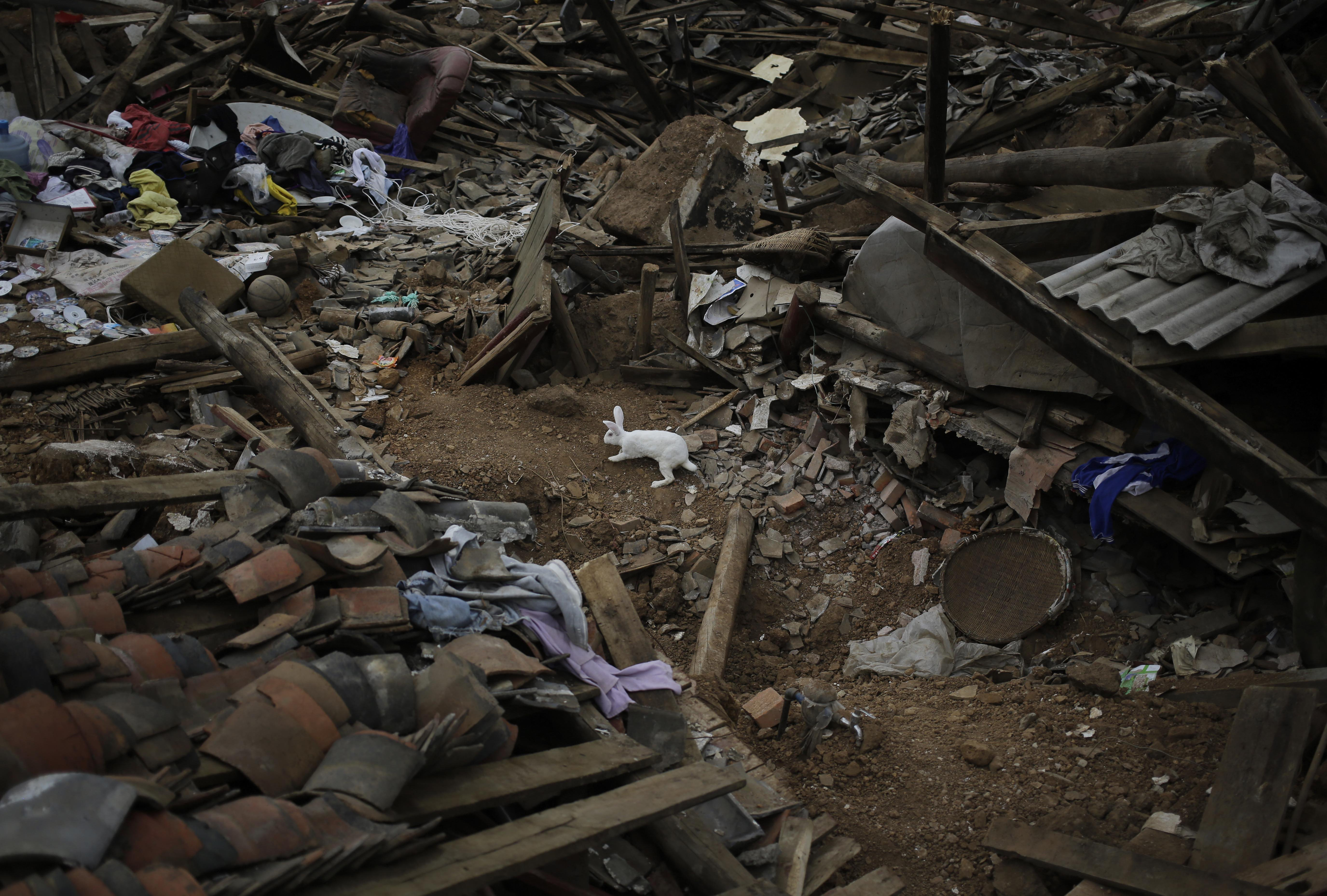 Aug. 5, 2014.  A rabbit sniffs around the rubbles following a massive earthquake in the town of Longtoushan in Ludian County in southwest China's Yunnan Province.