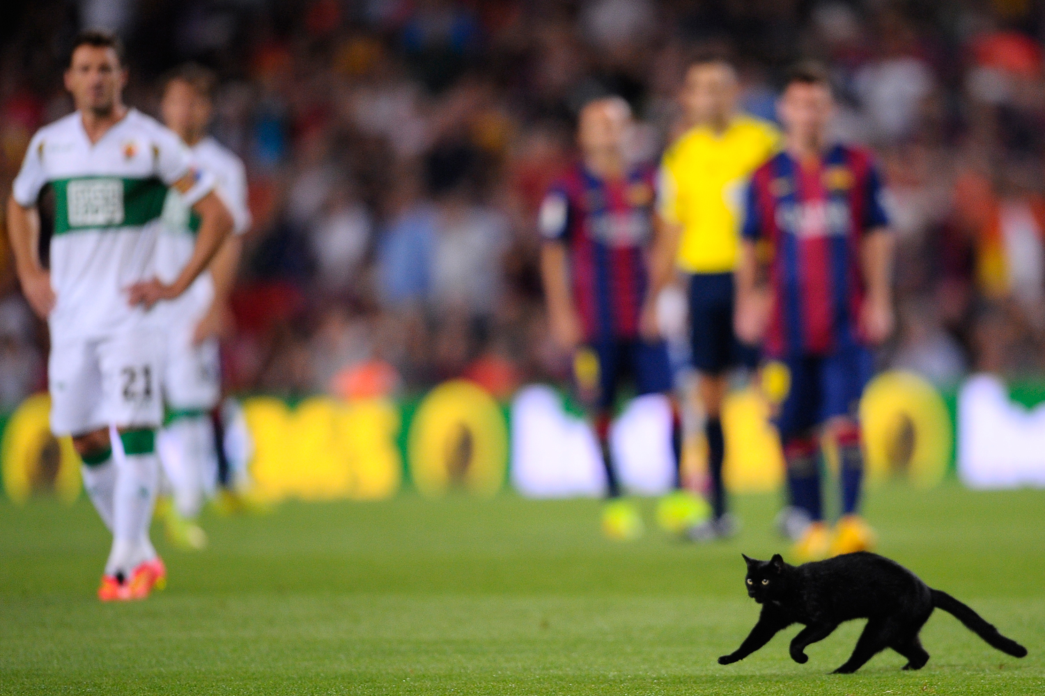 A cat runs on the pitch during a Spanish La Liga soccer match between FC Barcelona and Elche at the Camp Nou stadium in Barcelona, Spain, Sunday, Aug. 24, 2014.