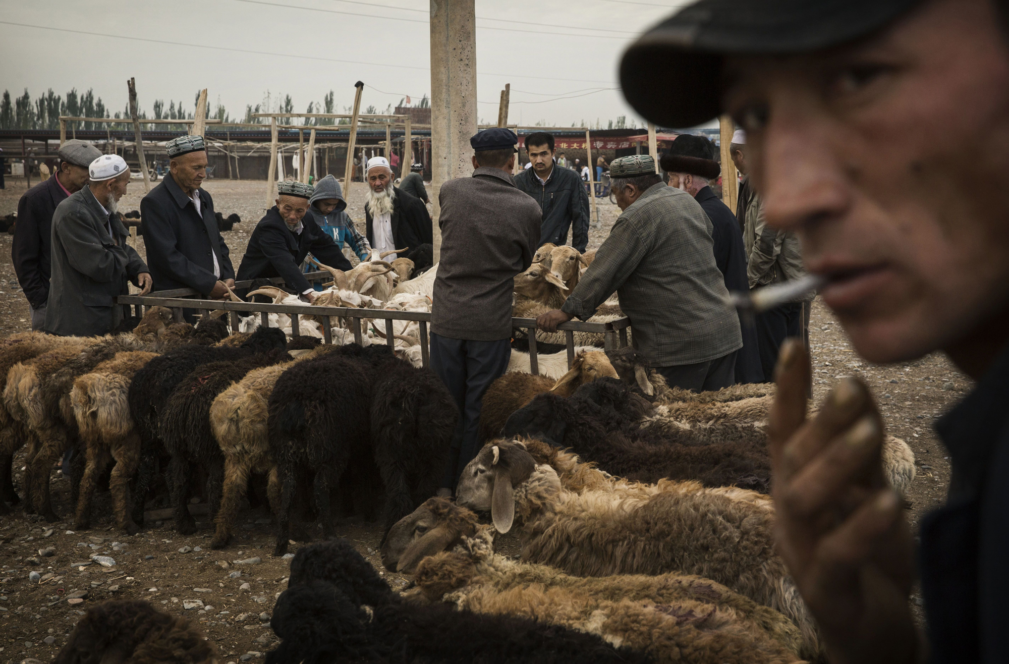 Uighurs inspect sheep for sale at a livestock market on August 3, 2014 in Kashgar.