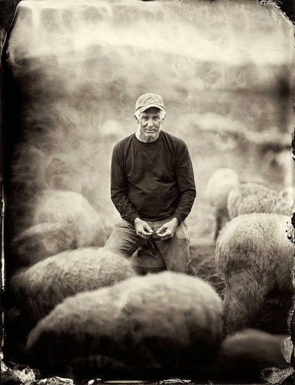 "At his farm in Goshen, New York, Wyatt raises 800 merino sheep for both meat and wool (the richly colored yarn are dyed on the farm). The poetry he posts on his blog reveals a love of language, which helps explain why although he farms organically—he no longer seeks the government's certification for doing so. ""I rescinded my [organic] certification two years after the USDA took over,"" he says. ""I don't like the word now because it's branding."""