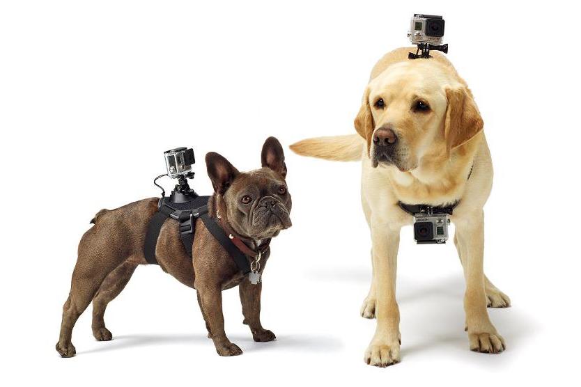 GoPro's new Fetch Dog Mount.