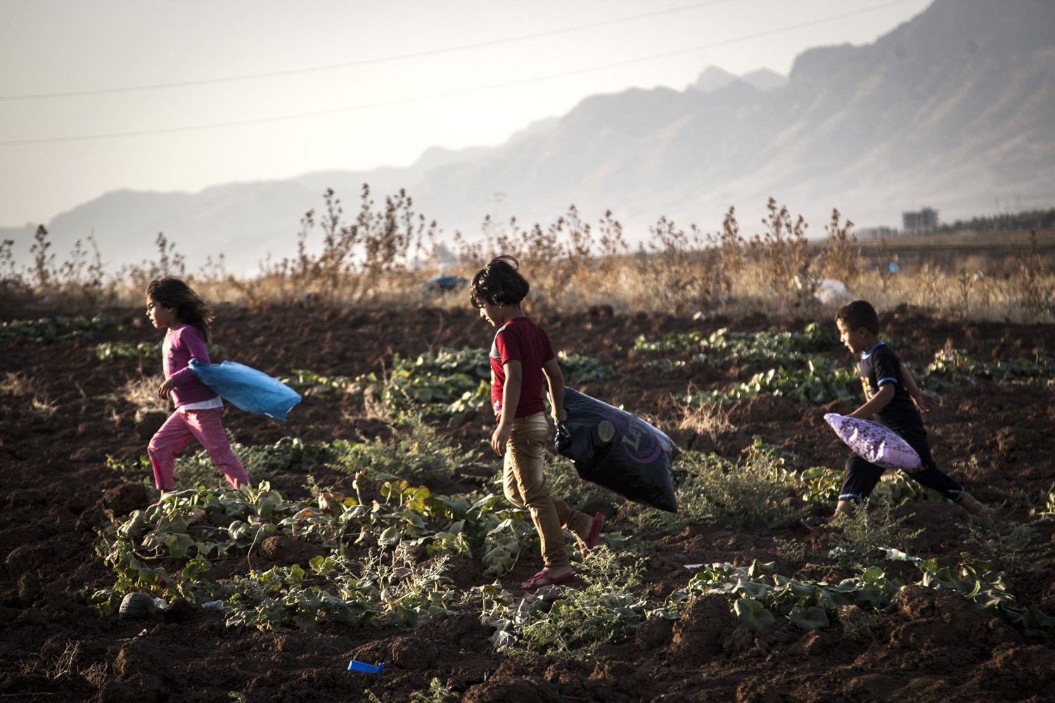 Aug. 16, 2014.  Children pick up melons  and bring them to their home after tens of thousand of Yazidis escaped from their ancient homeland of Sinjar and other villages after the attacks and mass executions  of  Islamic State (ISIS) militants who regard the ethnic minority as devil worshippers who must embrace their radical version of Islam or die.