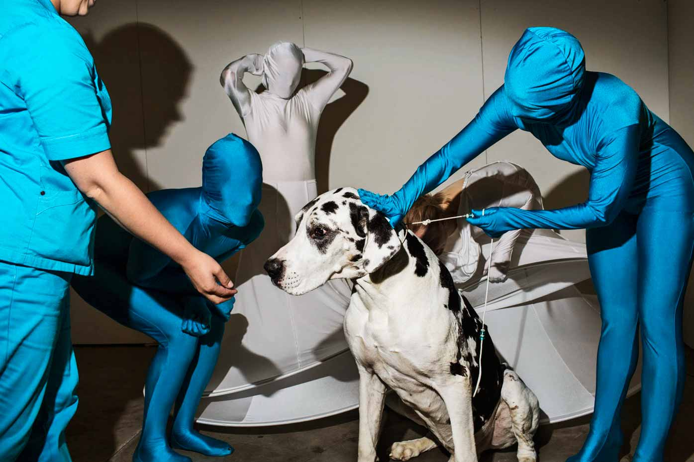 Kaapo, a Great Dane, meets performers from the Helsinki dance group High Heels
