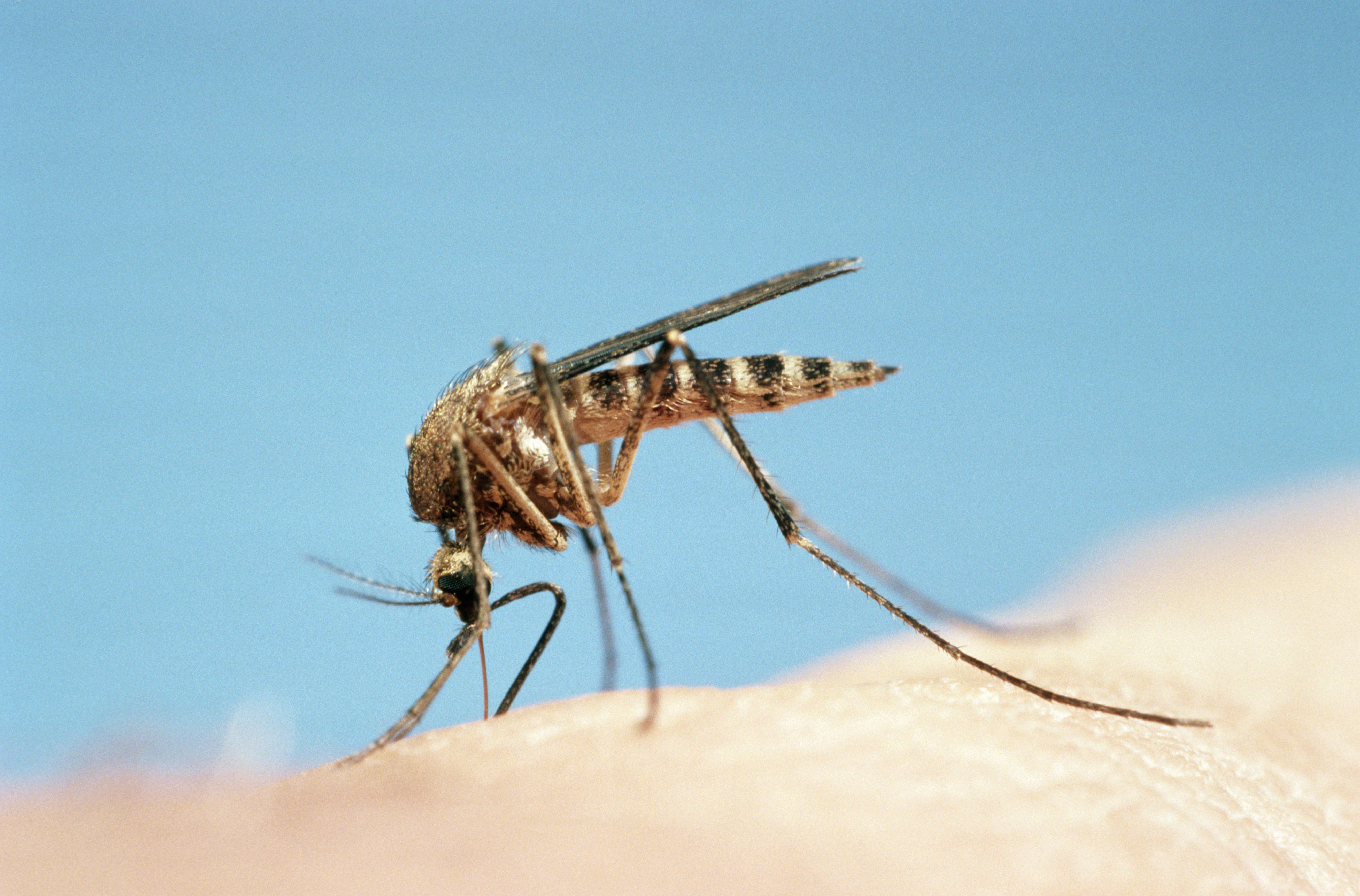 Mosquito Repellent And Bug Spray Picaridin And Lemon Eucalyptus