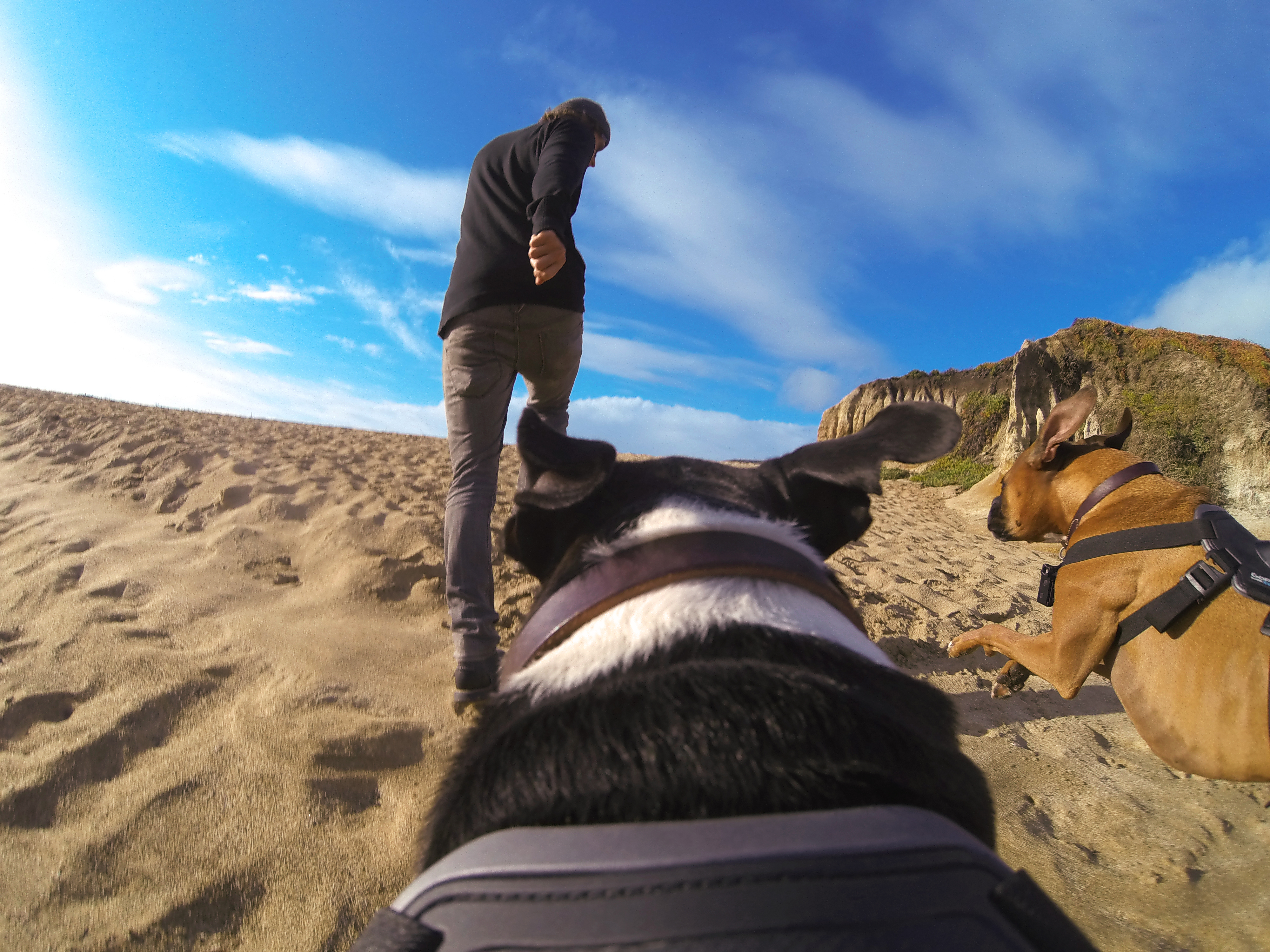 GoPro's new Fetch Dog Mount in action.