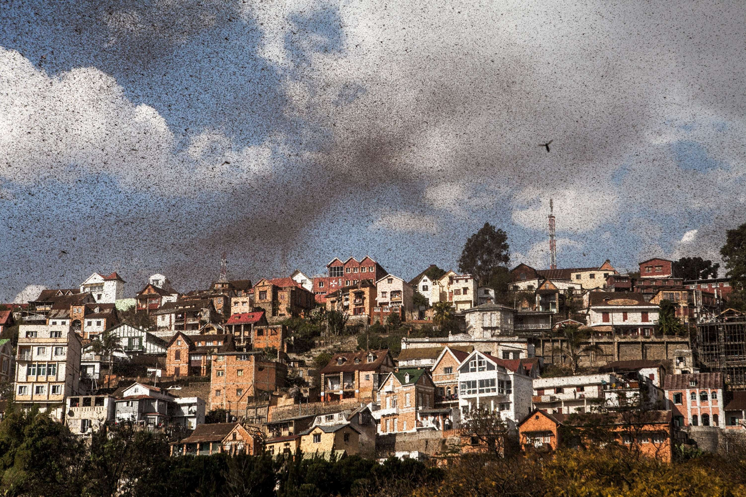 Aug. 28, 2014.                               A swarm of locusts invades the center of Mdagascar capitol Antananarivo.