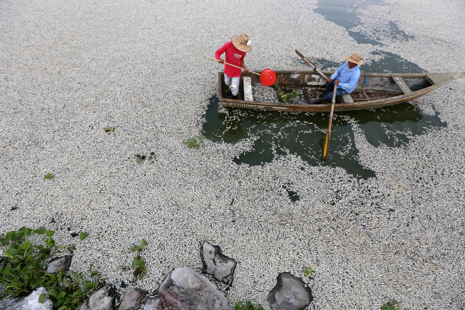 Aug. 31, 2014. Fishermen, firefighters, and Agriculture, Cattle, Rural Development, Fish and Food Secretary personnel collaborate in the cleaning of dead fish in the Cajititlan lake, Tlajomulco town, Mexican state of Jalisco. Close to 50 tons of fish have died over the last six days from unknown causes.