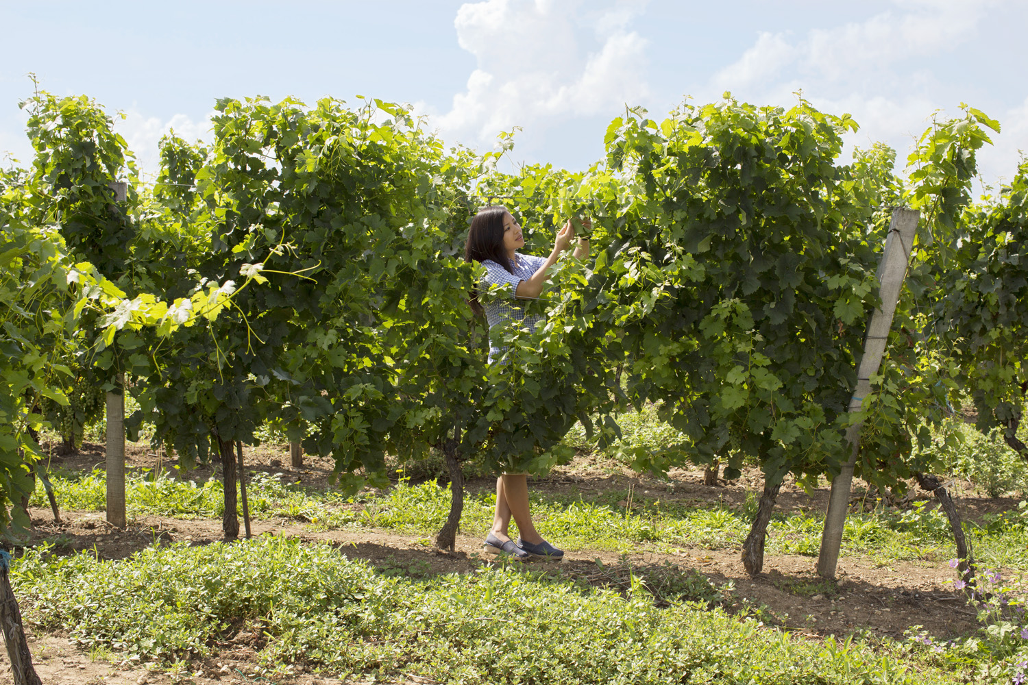 Chinese realtor Li Lijuan examines the vines on the grounds of Château Milord