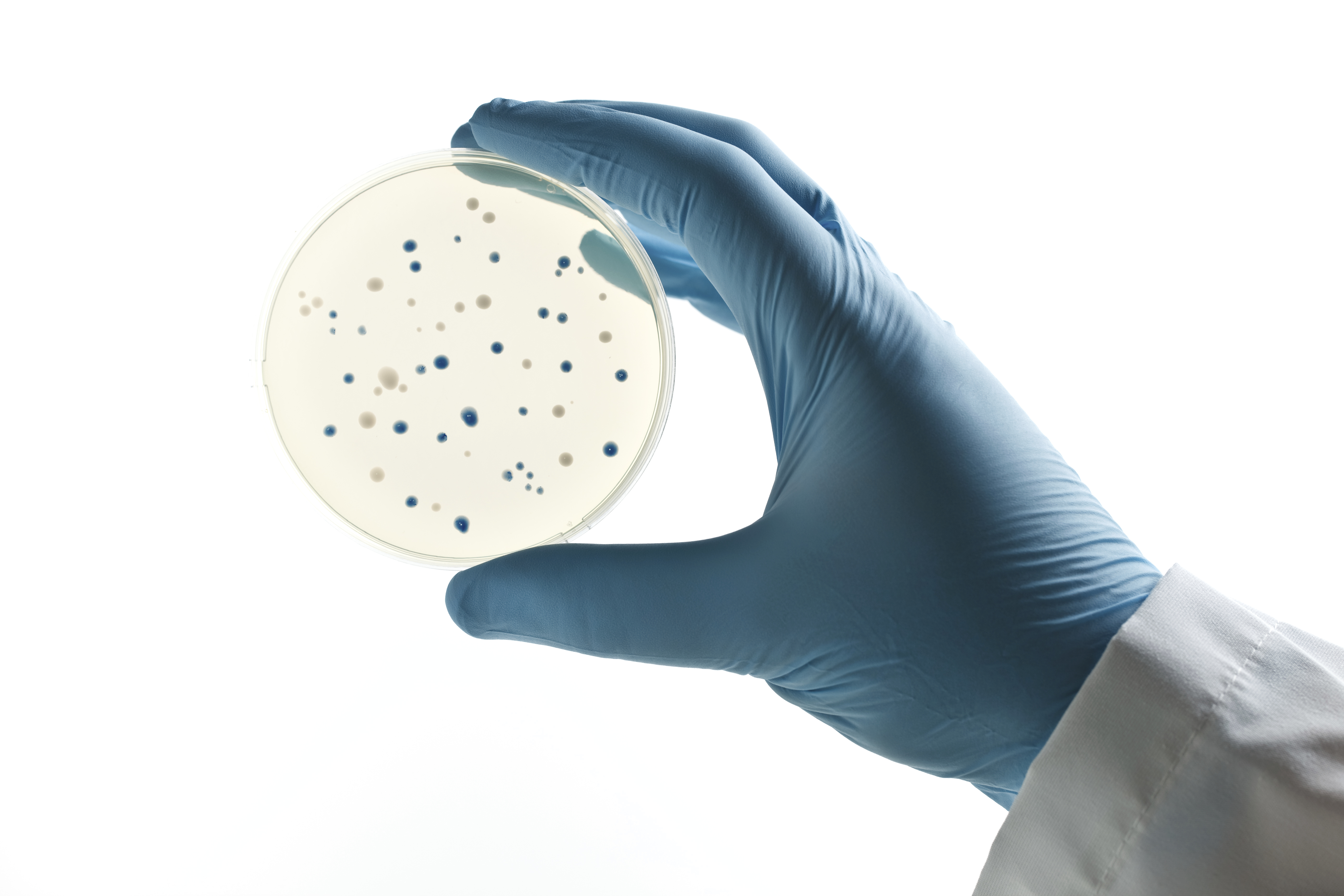 Our own gut bacteria may be the next source of antibiotics