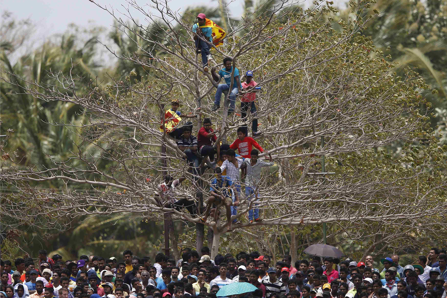 Aug. 30, 2014. Sri Lanka's cricket fans watch the match from a tree during the final ODI (One Day International) cricket match between Pakistan and Sri Lanka in Dambulla.