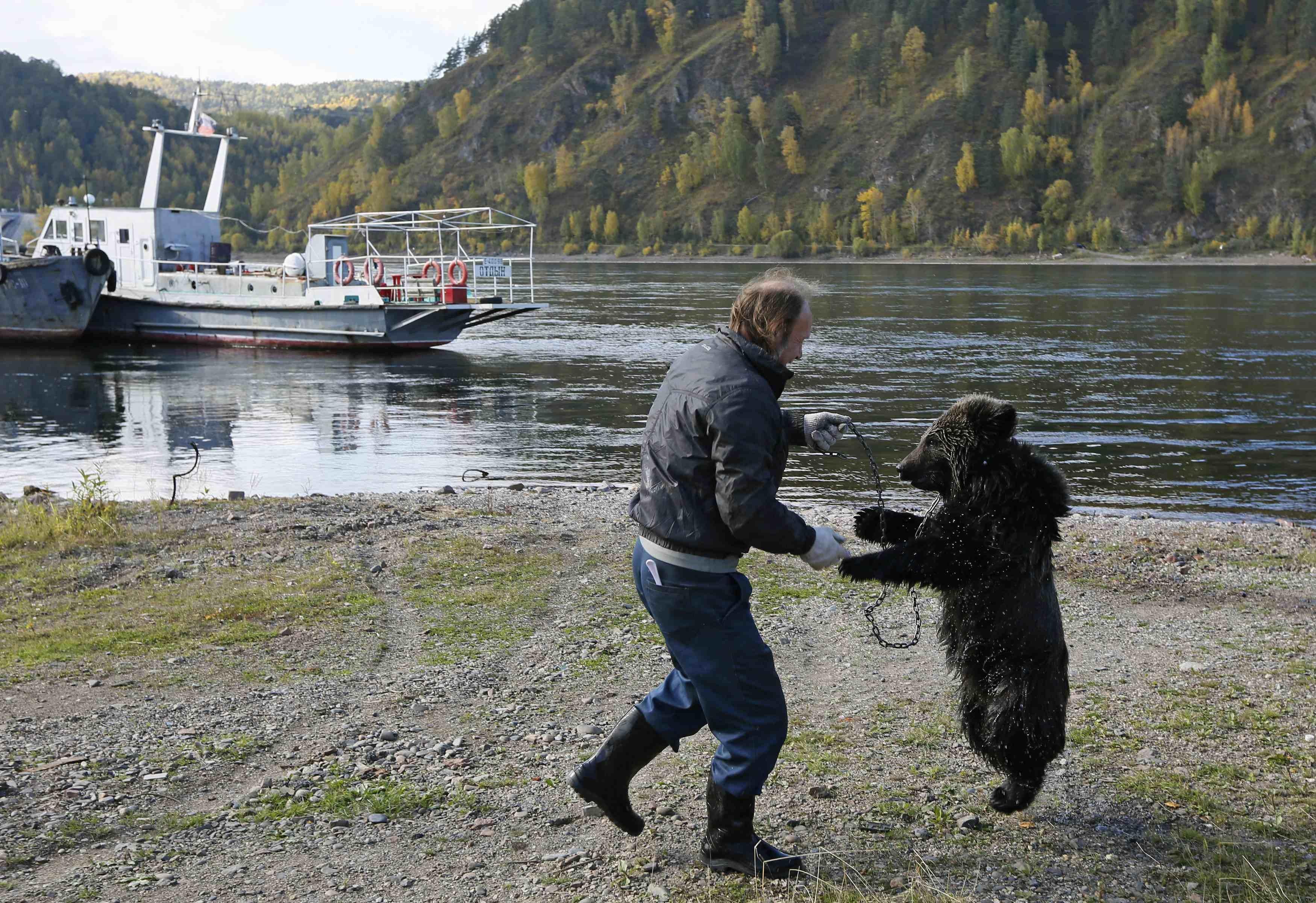 Alexander Kharatokin plays with a 9-month-old brown bear named Masha on the banks of the Yenisei River outside Krasnoyarsk, Siberia on Sept. 19, 2014.