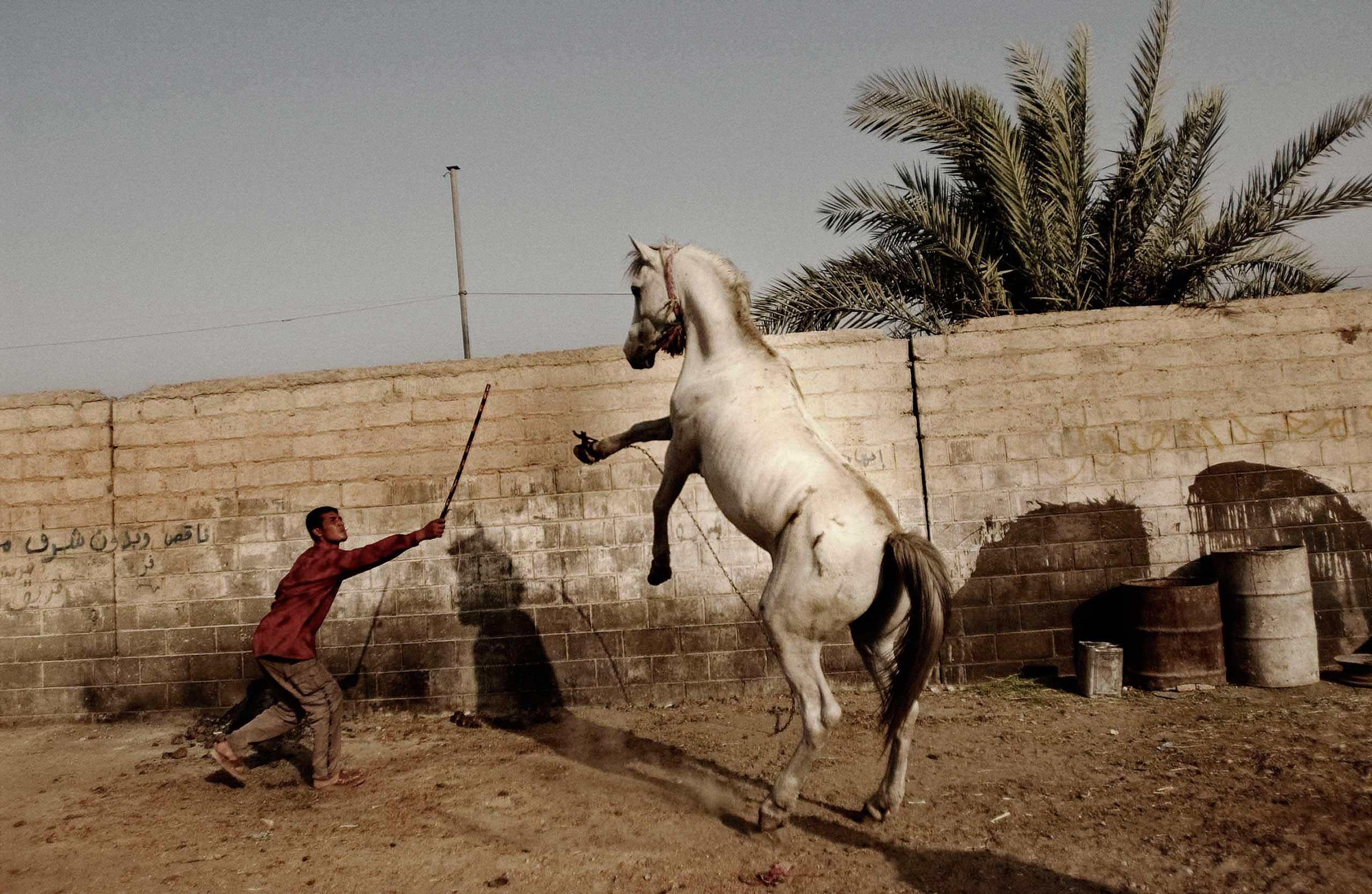 <b>Moises Saman, July 2004                                   </b>                                   I took this photograph a year after the fall of Saddam Hussein. I was driving around the sprawling slum of Sadr City, formerly known as Saddam City, when in a back alley I noticed a young man trying to tame this majestic white horse. The scene was at once mesmerizing and jarring because the animal seemed so out of place. Looking back at this memory, the photo represents to me the opulence of Saddam's reign, and the struggles of the Iraqi people to regain a sense of control with what remained from the former regime.