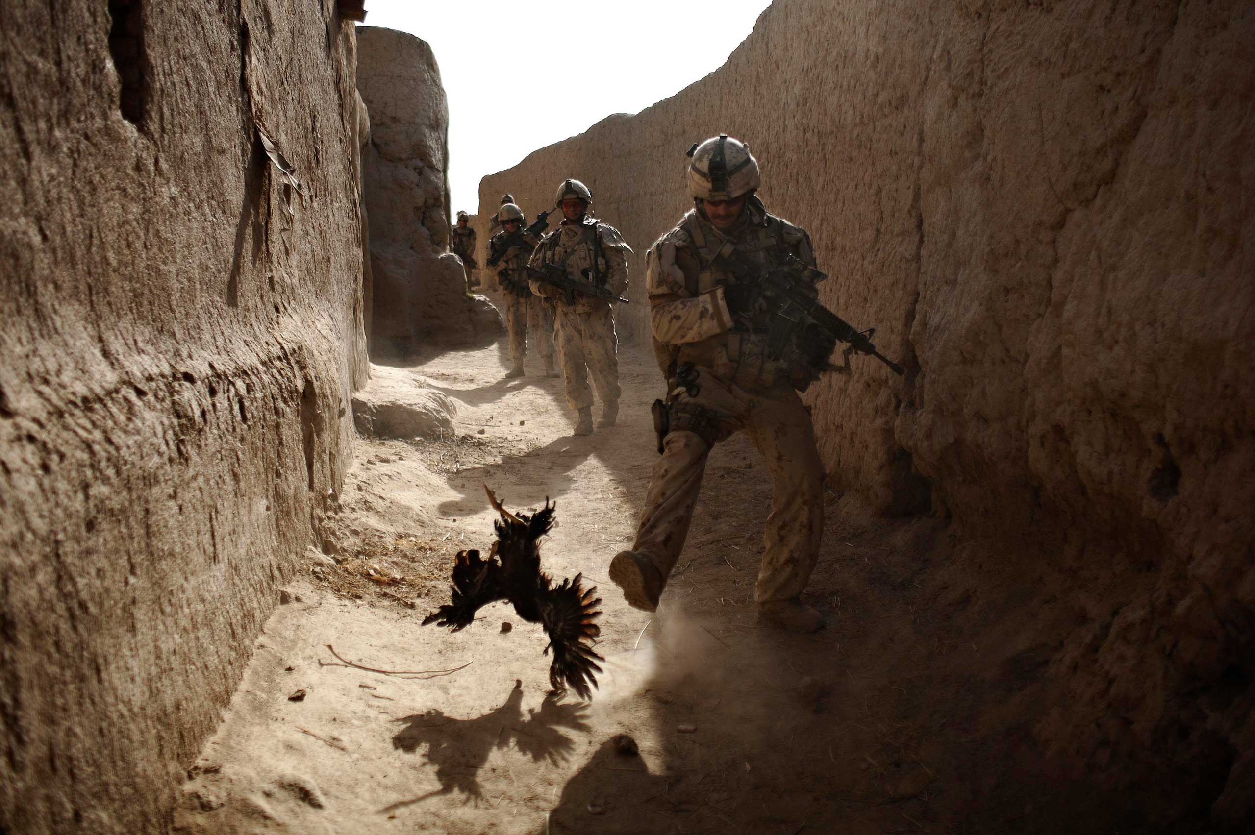 A Canadian soldier with the 1st RCR Battle Group, The Royal Canadian Regiment, chases a chicken seconds before he and his unit were attacked by grenades shot over the wall during a patrol in Salavat, southwest of Kandahar, Afghanistan, Sept. 11, 2010.