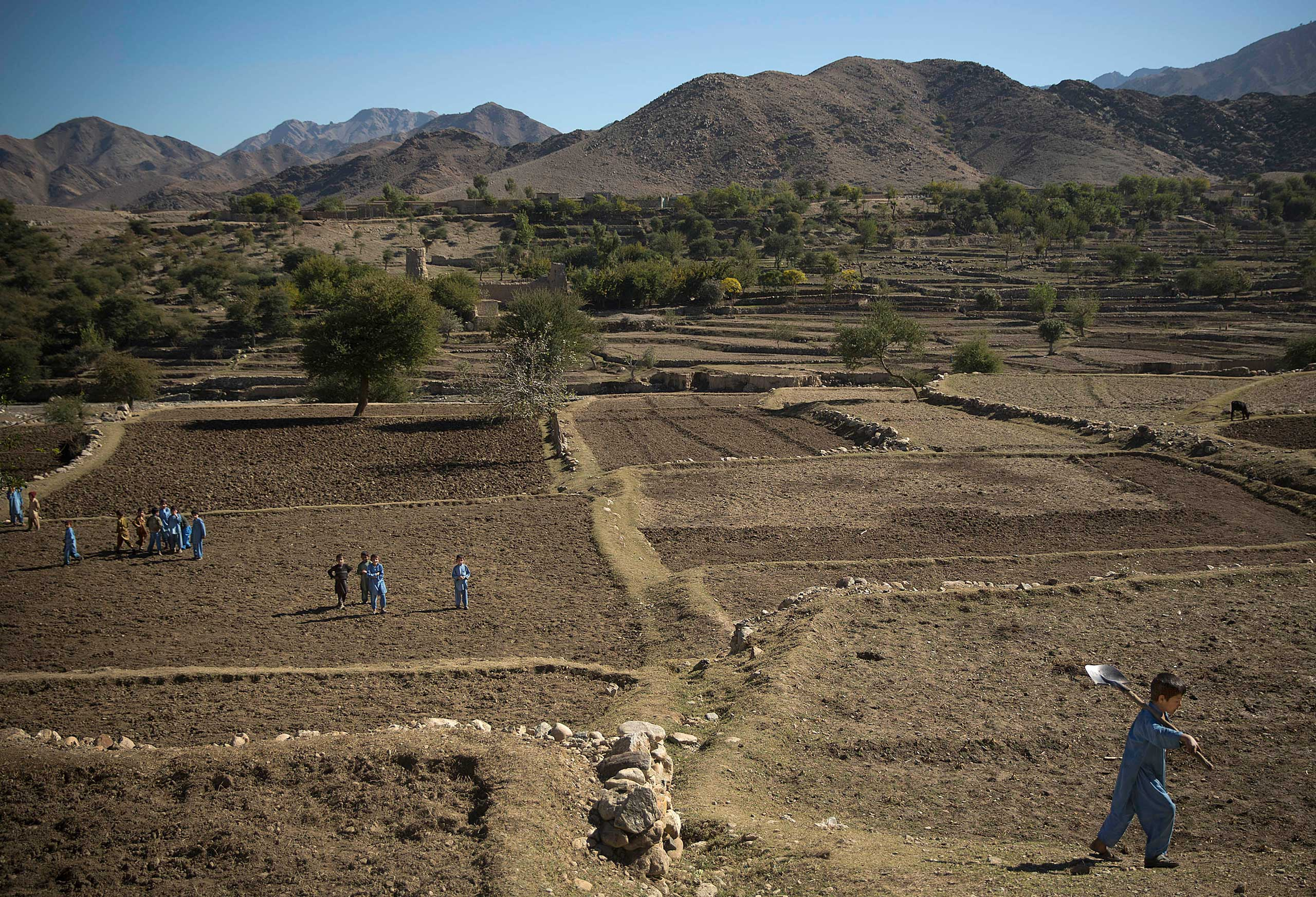 Afghan school boys leave the fields after helping to prepare the soil for poppy seeds in Cham Kalai village in Afghanistan's eastern Nangarhar province, an area which is largely controlled by Taliban, Nov. 12, 2013.