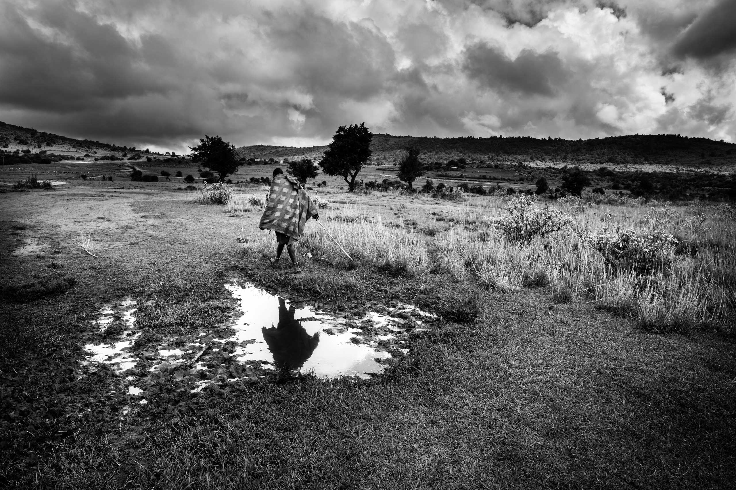 Maasai man walking to the forest to help others bring slaughtered animals to the village.