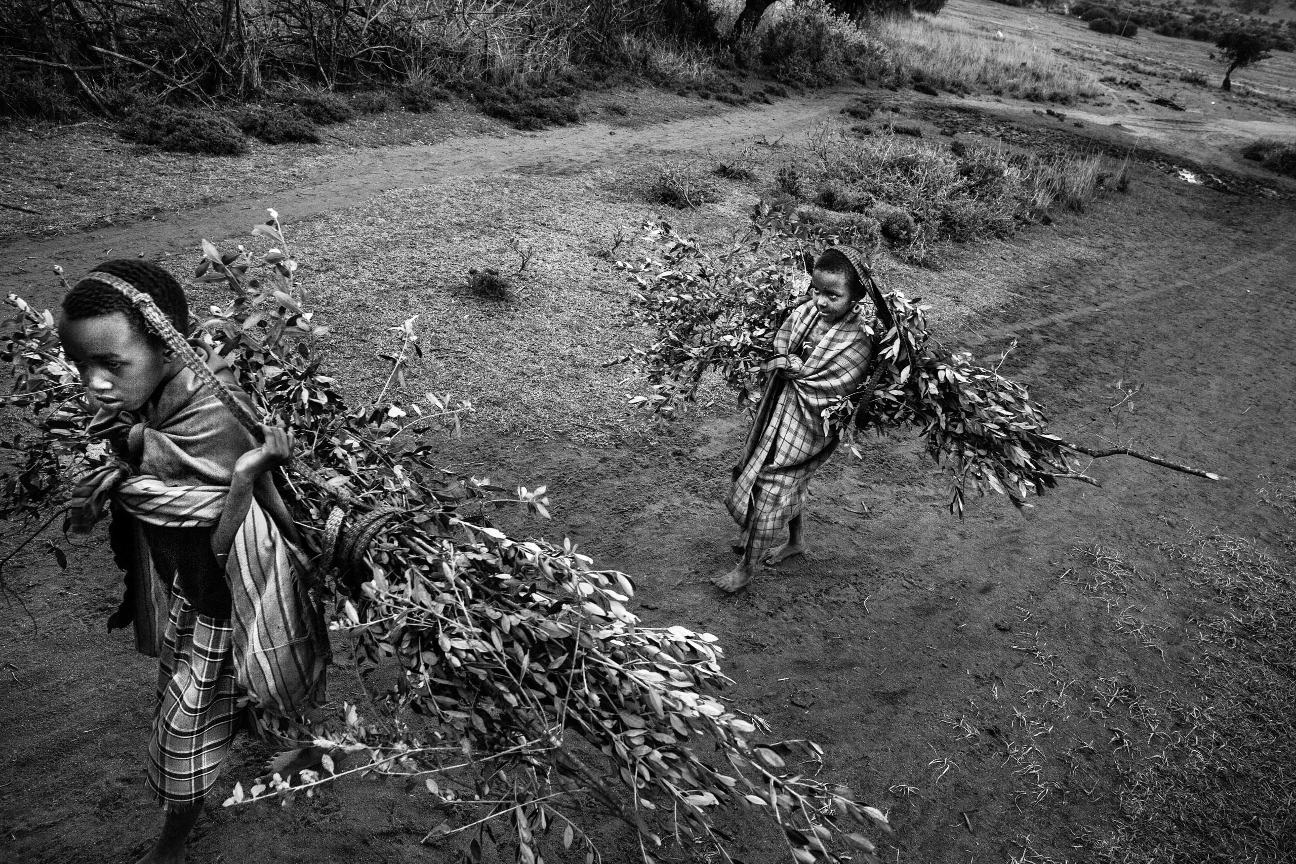 Two children carry tree branches for the circumcision ritual.