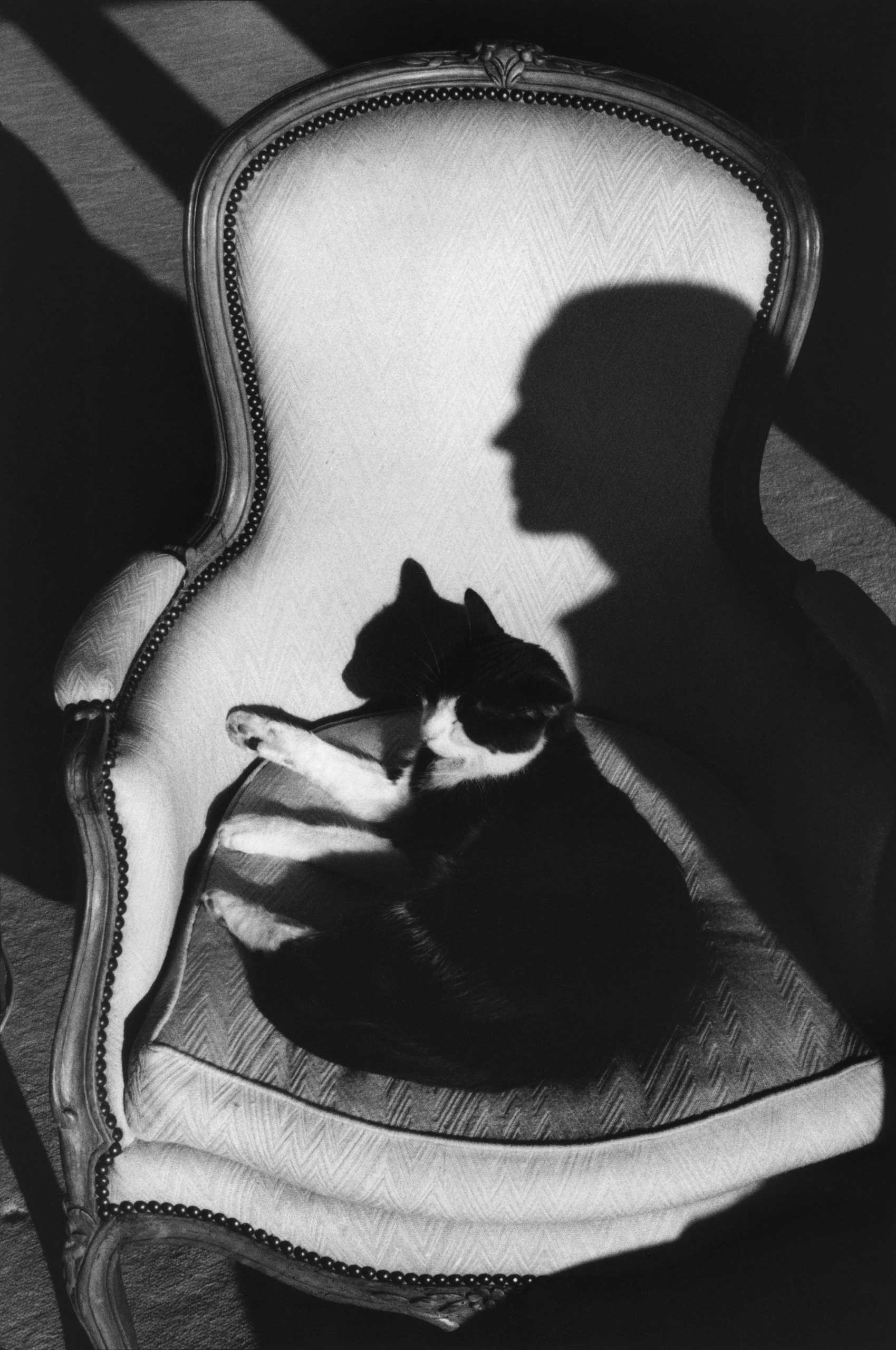 Our cat Ulysses and Martine's shadow, 1989.