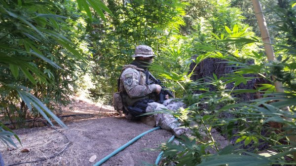 California Marijuana Pot Country Policed By Security Group