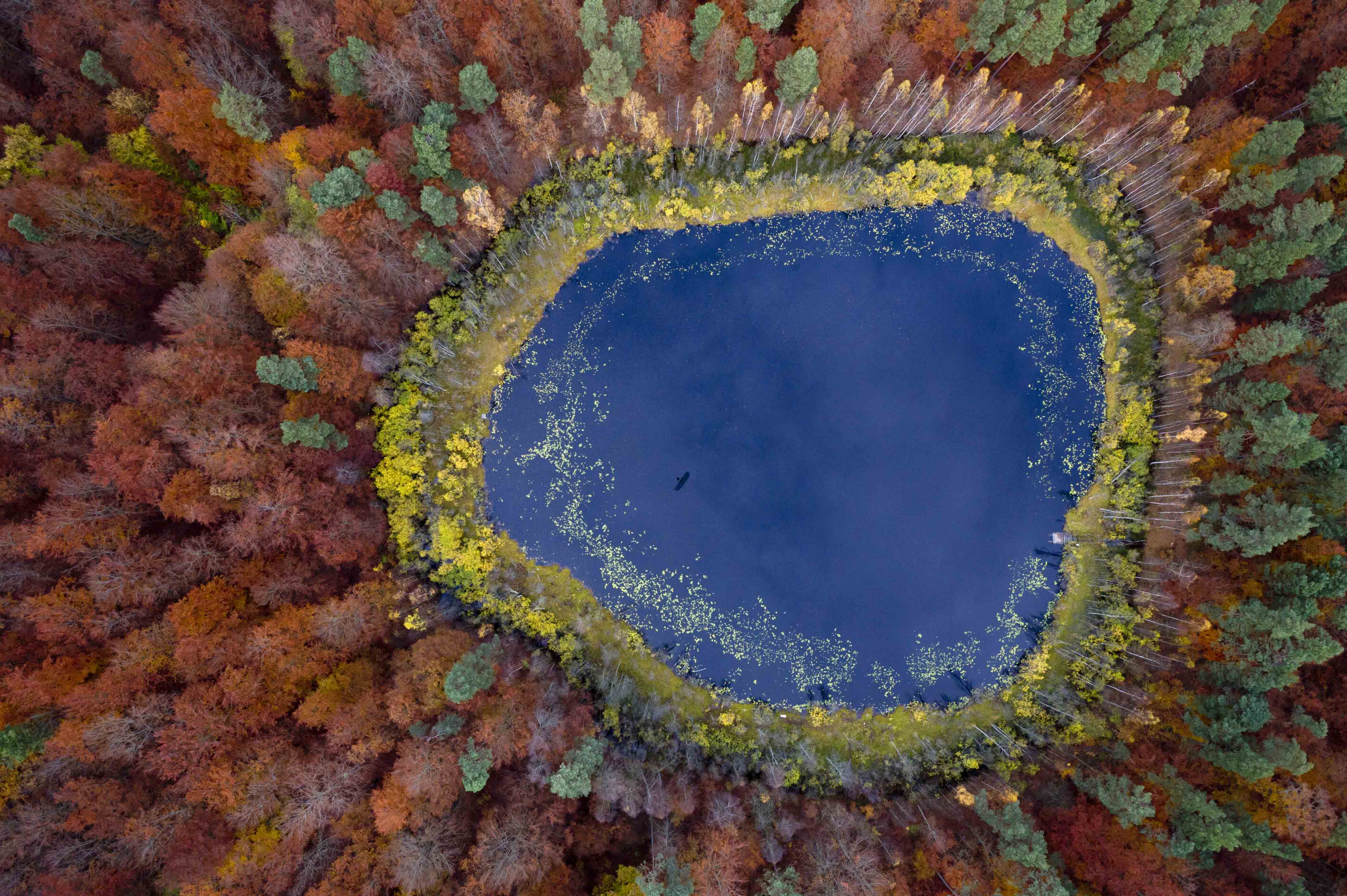 A view over a lake in a forest, Kashubia, Poland.