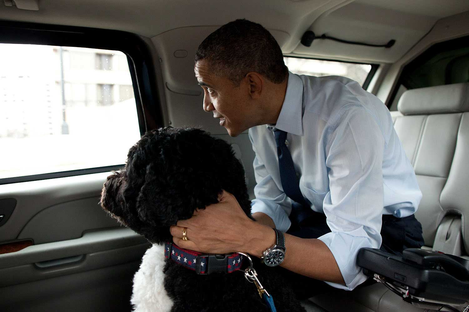 The President and Bo, the Obama family dog, ride in the presidential motorcade en route to PetSmart in Alexandria, Va. The President bought Bo some Christmas gifts at the pet store then walked nearby to Best Buy to purchase gifts for his daughters, Dec. 21, 2011.