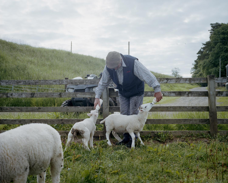 Archie, a Scottish Shepherd, Northumberland, England.