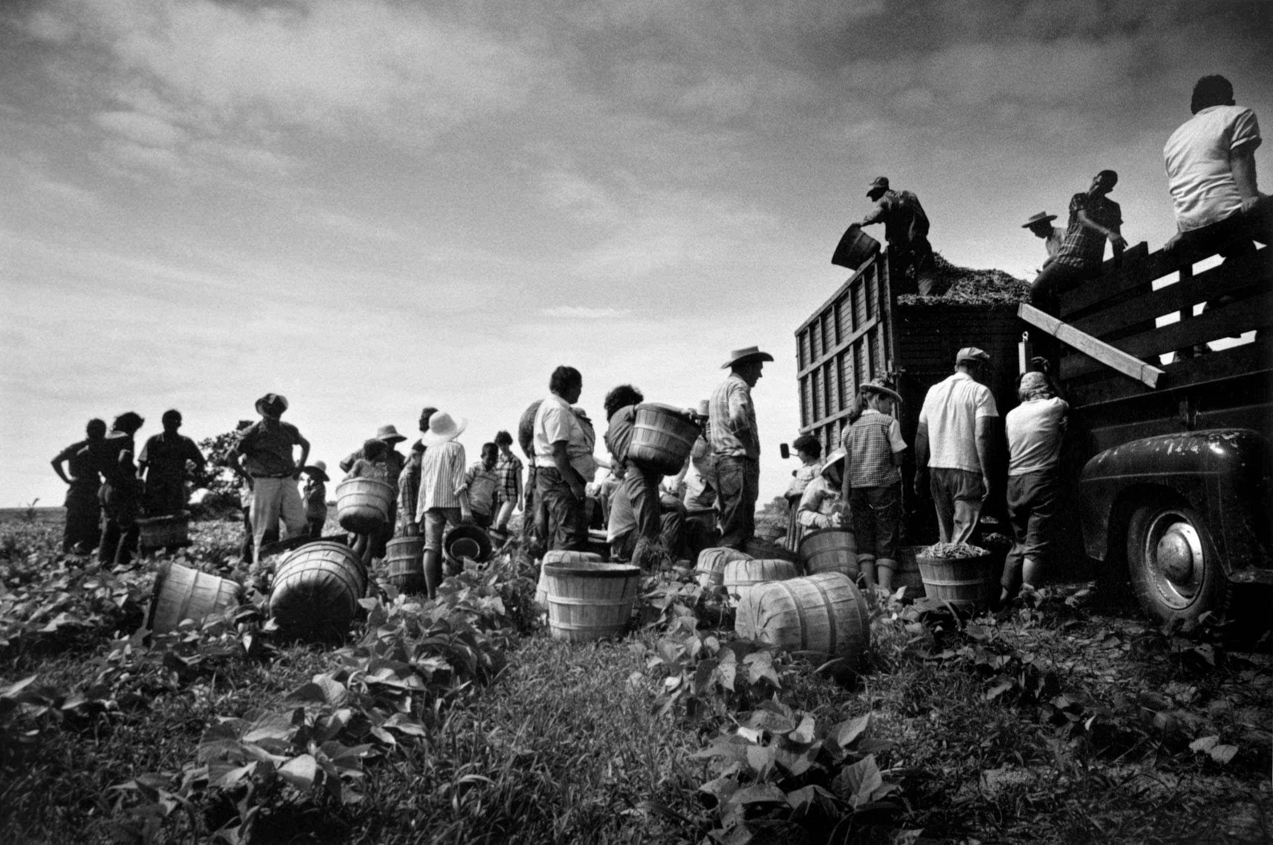 The Bean Pickers, Arkansas, 1961.