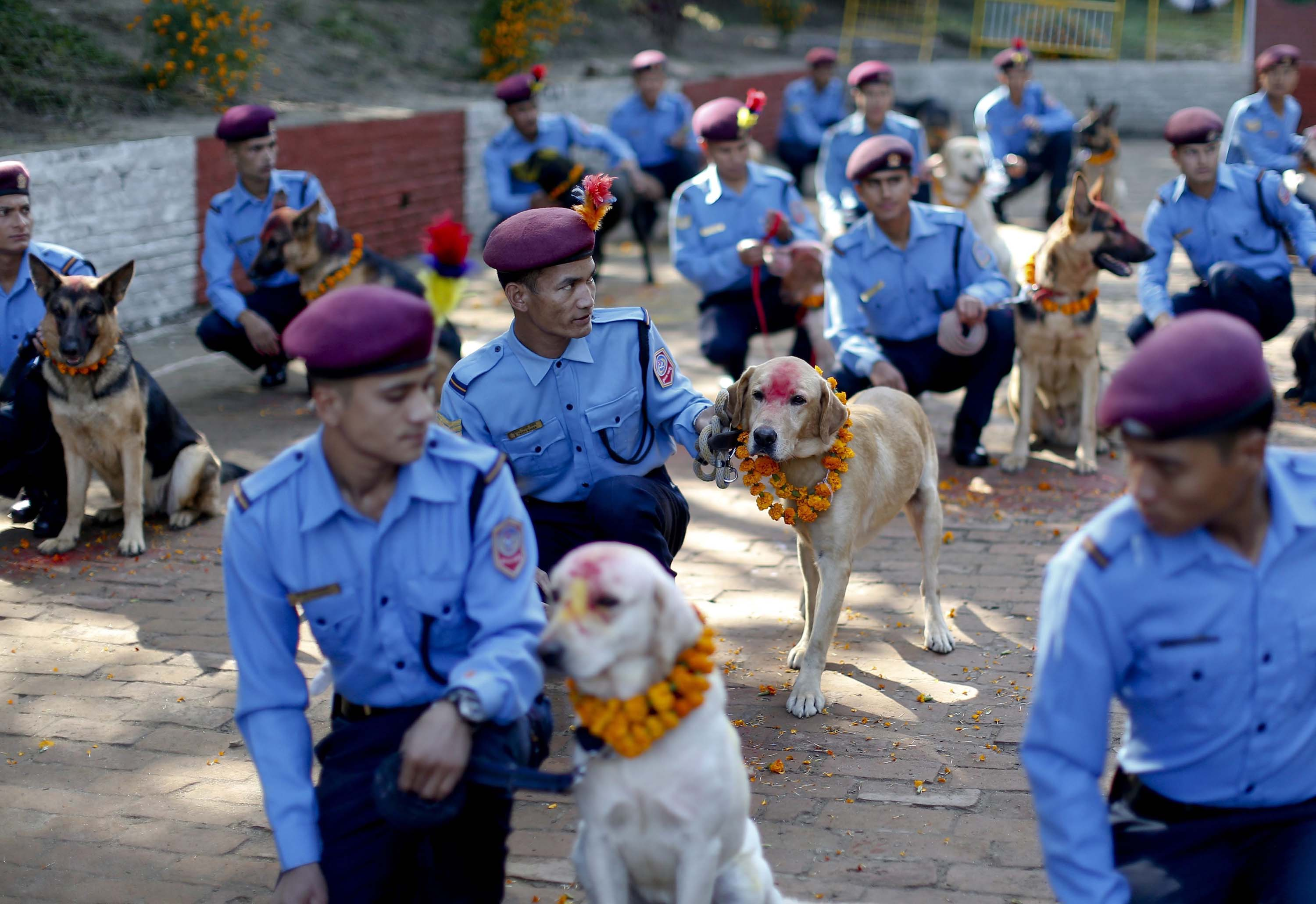 Nepalese police officers kneel next to dogs with colored powder on their heads at Nepal's Central Police Dog Training School as part of the Diwali festival, also known as Tihar Festival, in Kathmandu, Nepal on Oct. 22, 2014.