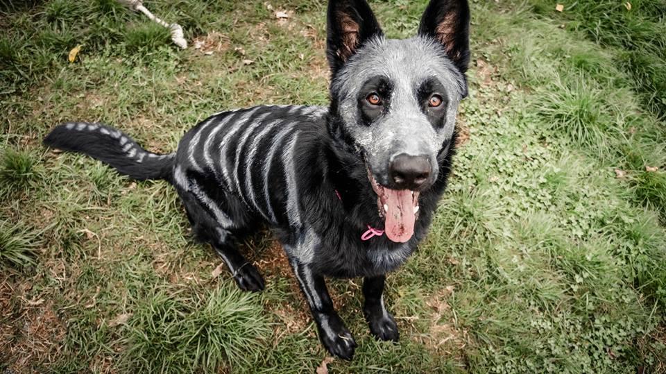 The Painted Skeleton Dog Nixe