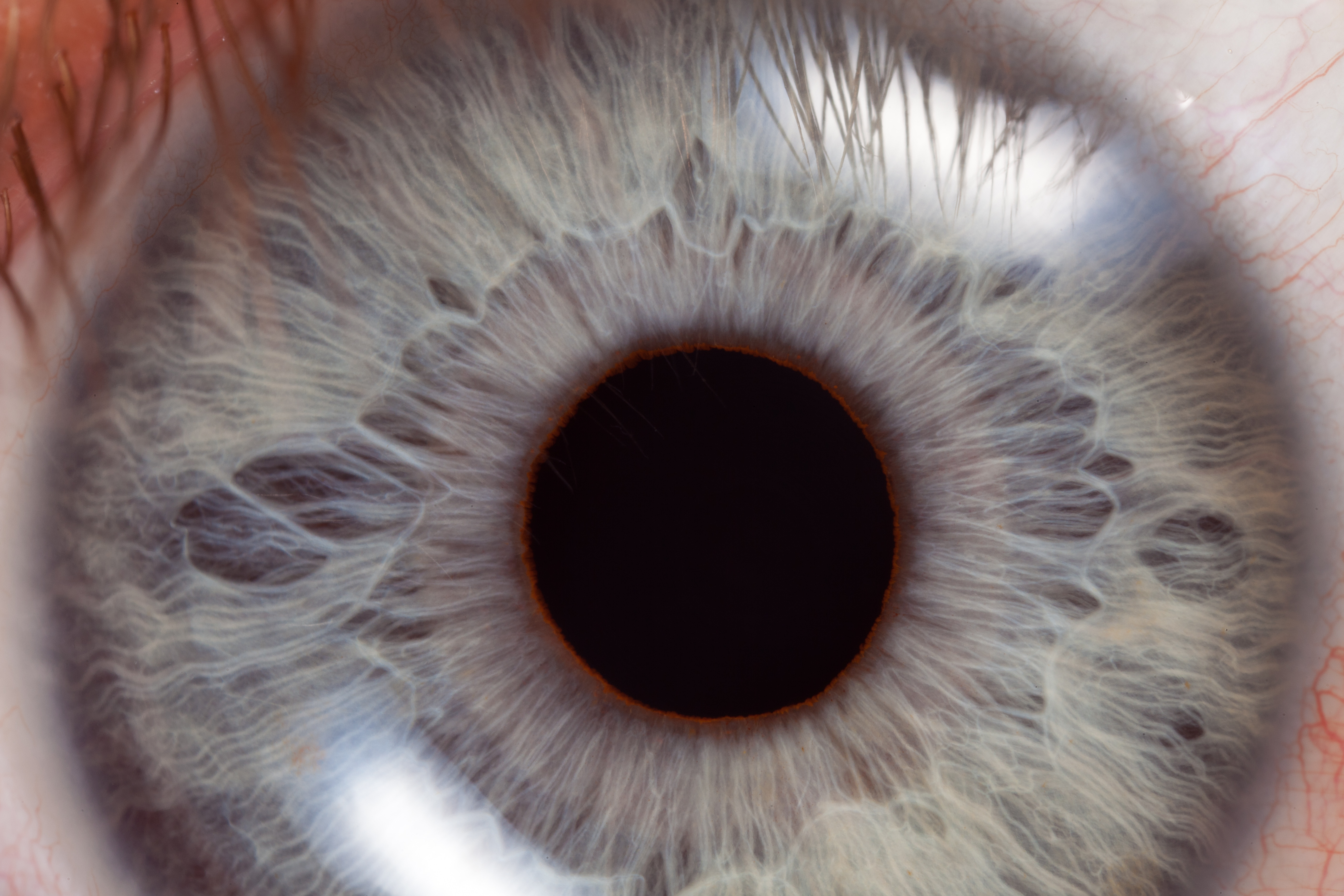 Stem cells could lead to new treatments for  eye disorders