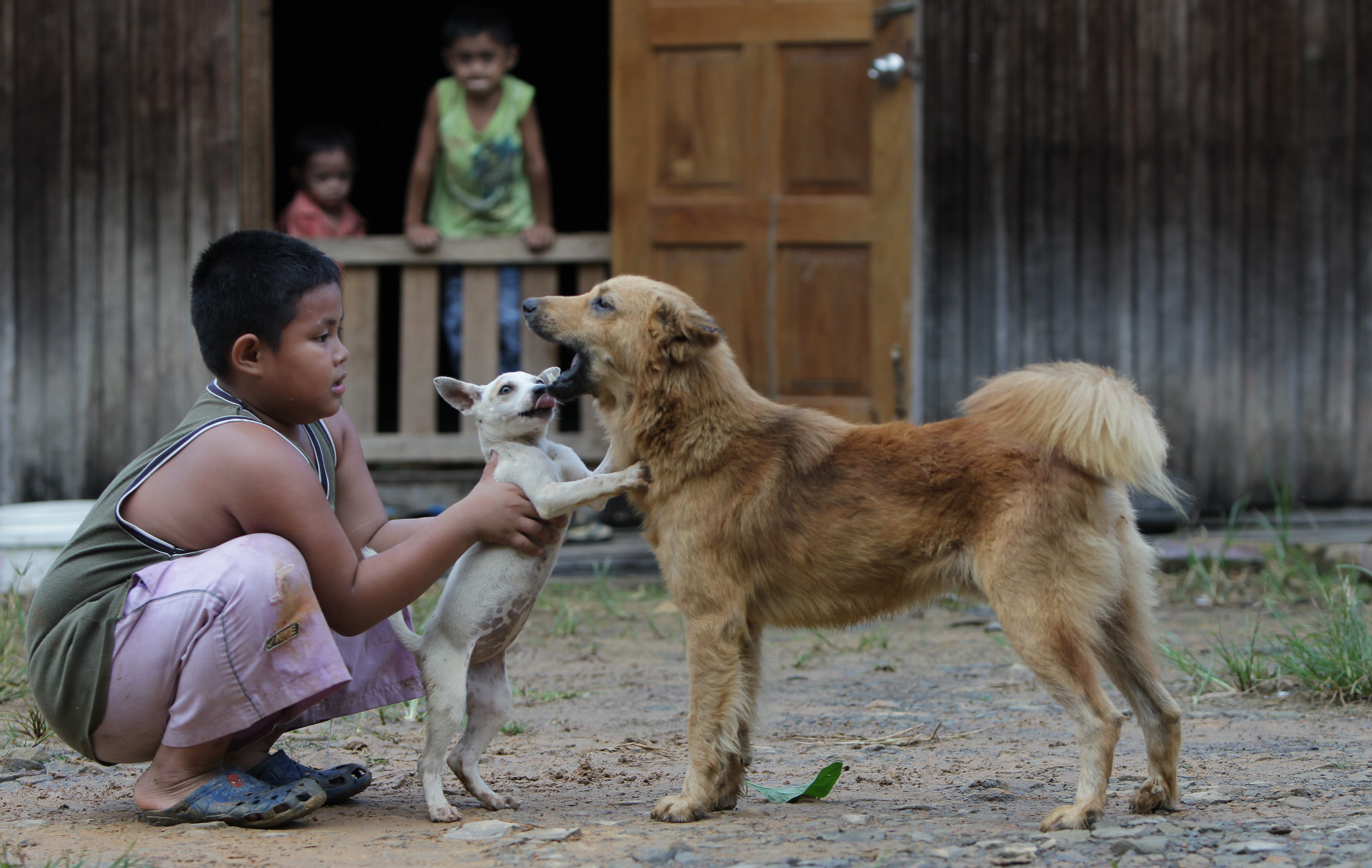 A boy plays with dogs outside his long house in Nahajale, Malaysia's Sarawak region, on Sept. 25, 2011