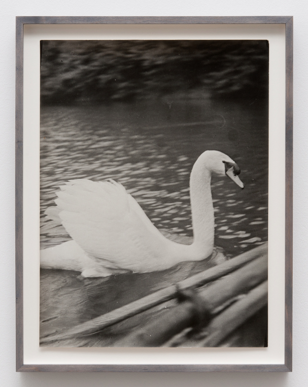"""Guided in Silence (11th Page of the """"Sleeping Beauty""""), 1982 - I almost walked right past this black-and-white swan by Romanian artist Ion Grigorescu. It was so innocent, so vernacular; like a found photograph, and yet because of its suggested innocence, I had to walk back and look again. Talking with the gallery's Maria Betegon, I discovered Grigorescu not only created art during Ceauşescu's regime, but also became one of Romania's most significant post-war artists. Suddenly the swan became poetic; a comment on making art during a dictatorship."""