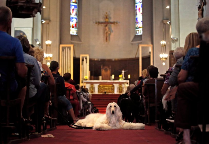 Owners and their pets attend a mass at the Saint Pierre D'Arene church to honour the feast of Saint Francis of Assisi in Nice