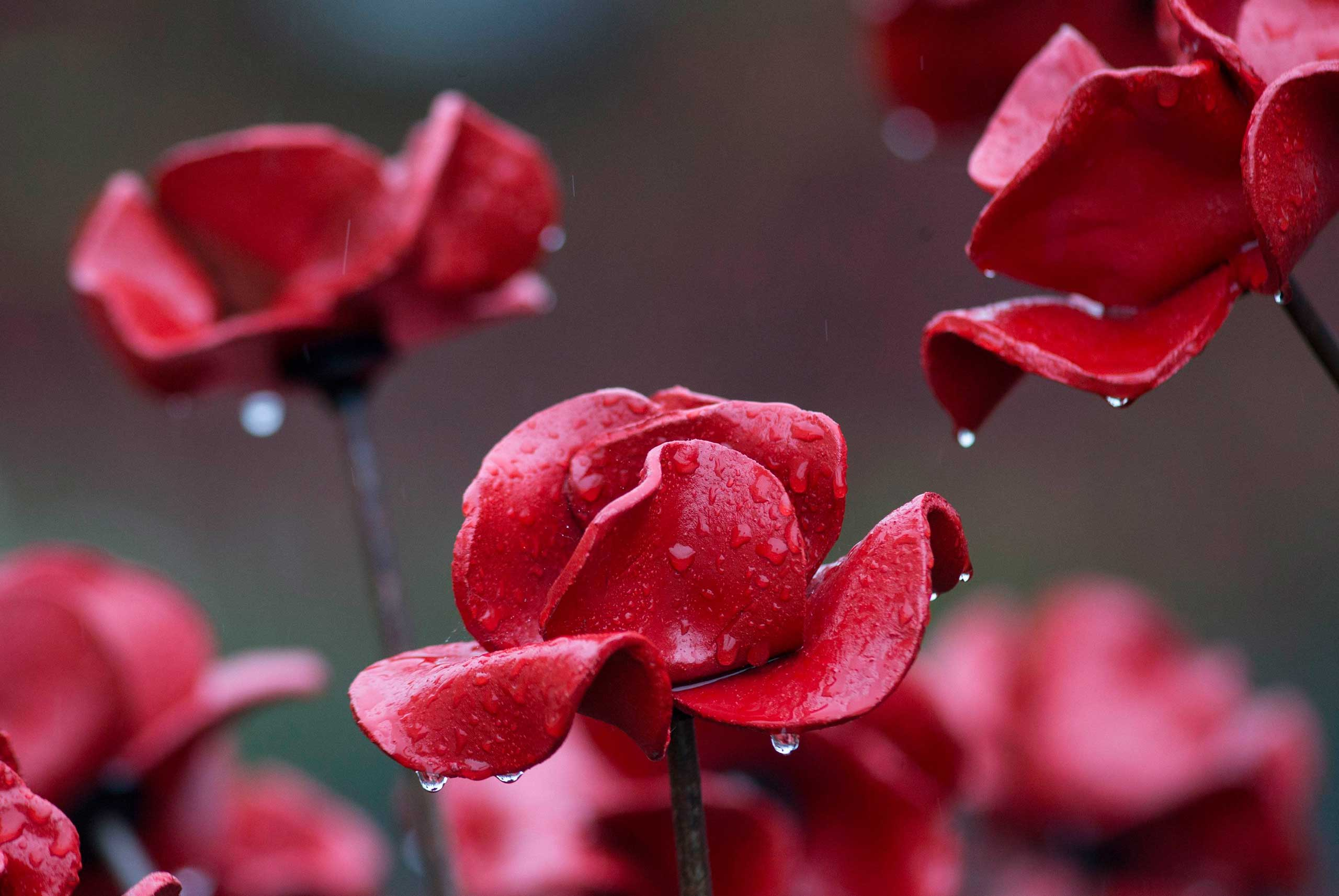 Oct. 29, 2014. Rain covered ceramic poppies that form part of the art installation, Blood Swept Lands and Seas of Red , are seen at the Tower of London in London.