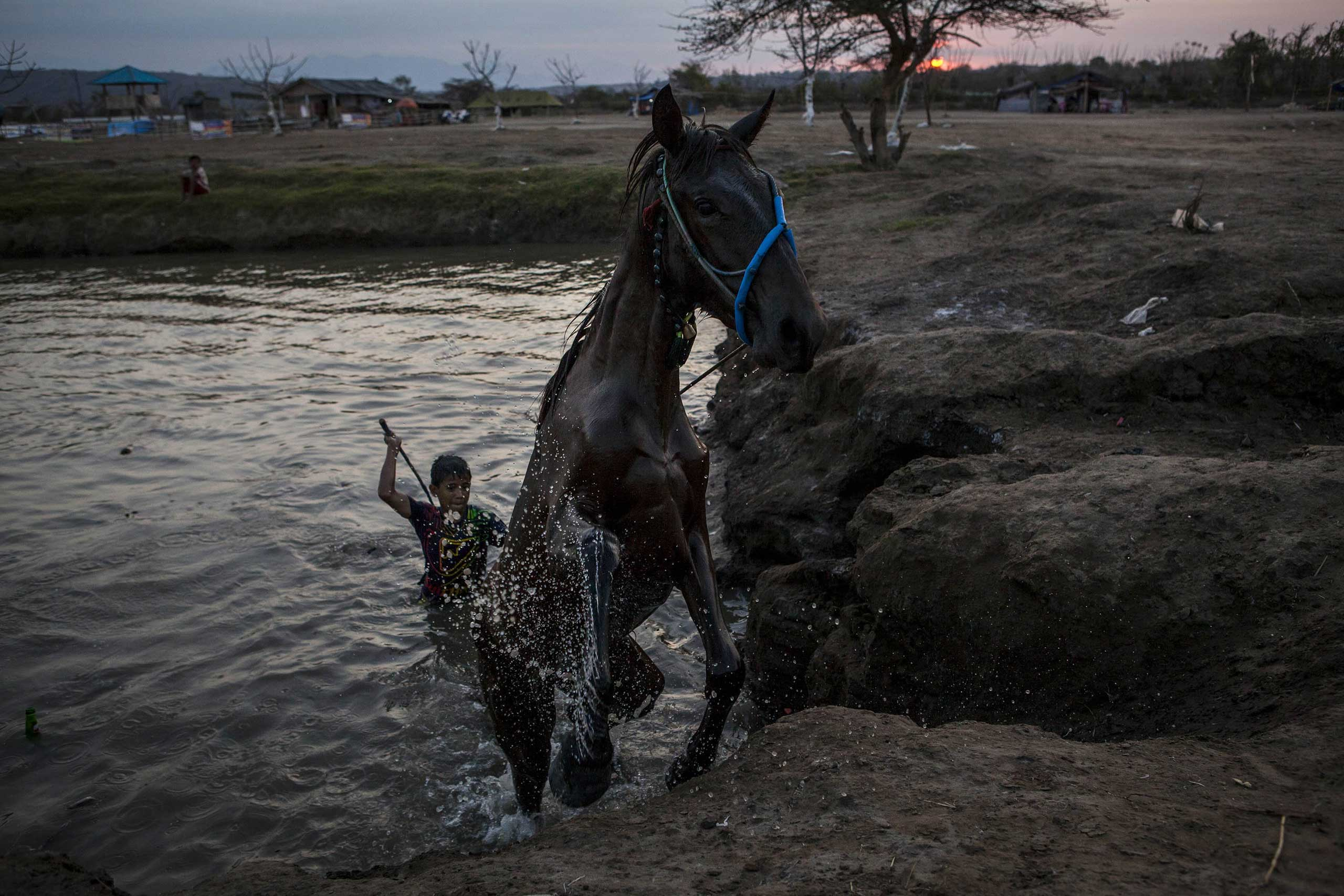 Sept. 26, 2014. A horse comes out of the water after being given a bath by a child jockey before the traditional horse races as part of Moyo festival in Sumbawa Island, West Nusa Tenggara, Indonesia.