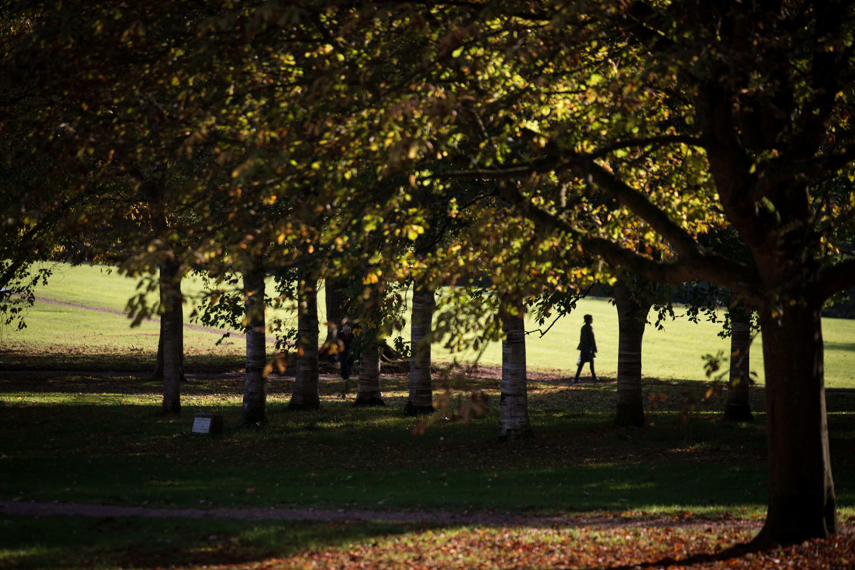 Autumn colors begin to show on trees in Royal Victoria Park in Bath, England, on Oct. 7, 2014